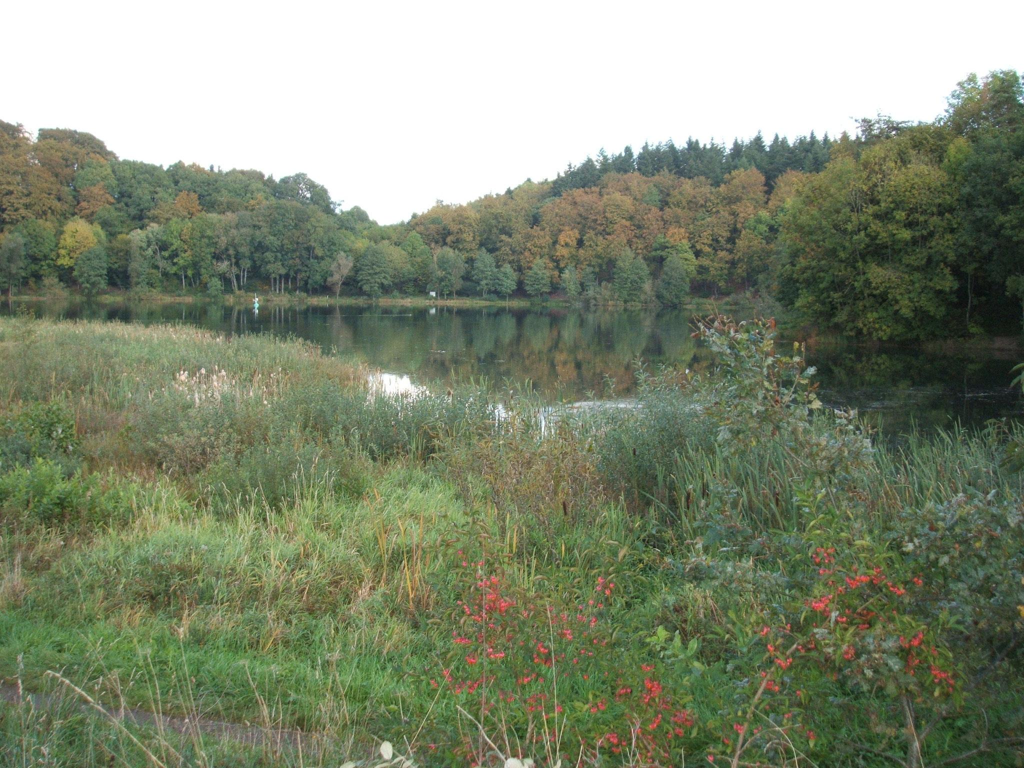 Holzmaar bei Gillenfeld mit Verlandungszone