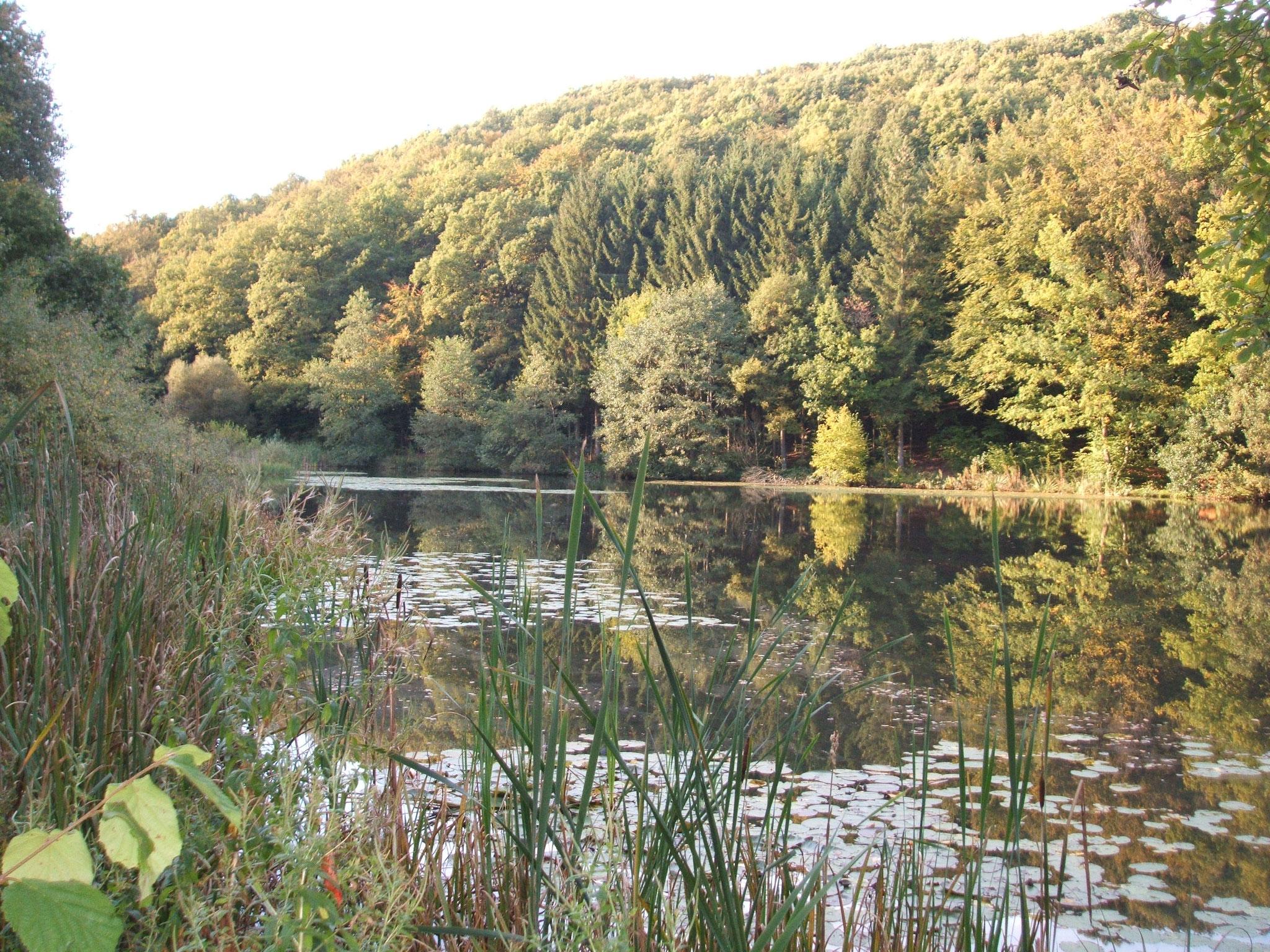 Klosterweiher bei Mückeln