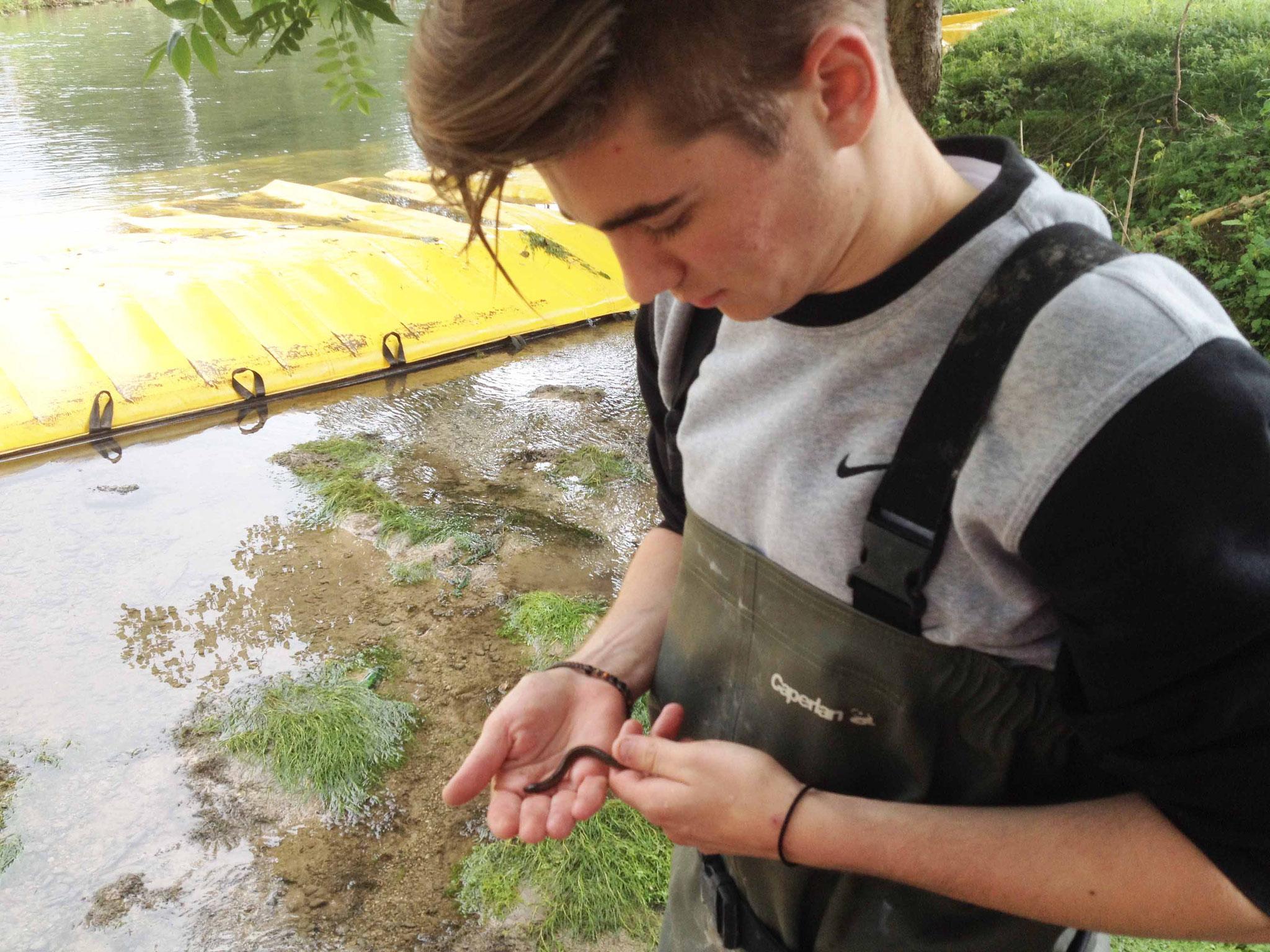 Pêche de sauvetage lamproie planer