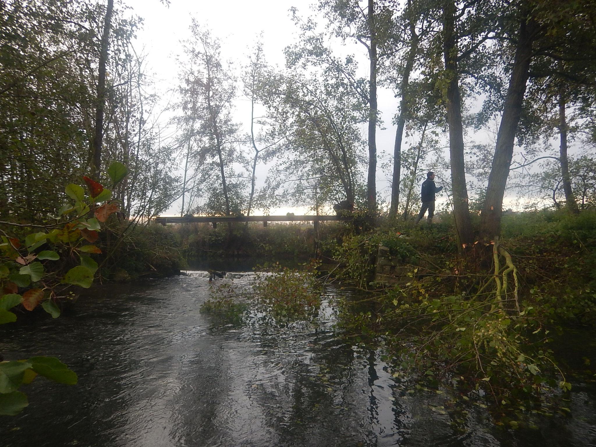 Travaux forestiers et nettoyage des encombres accumulés dans le portique