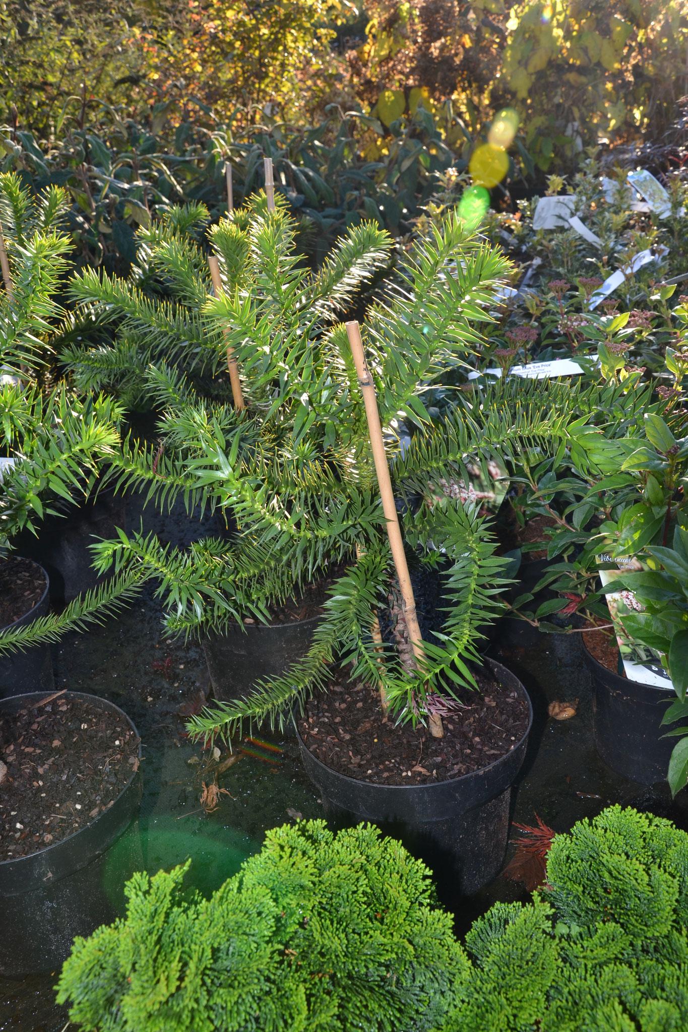 Neu Pflanzen Garten Ideen
