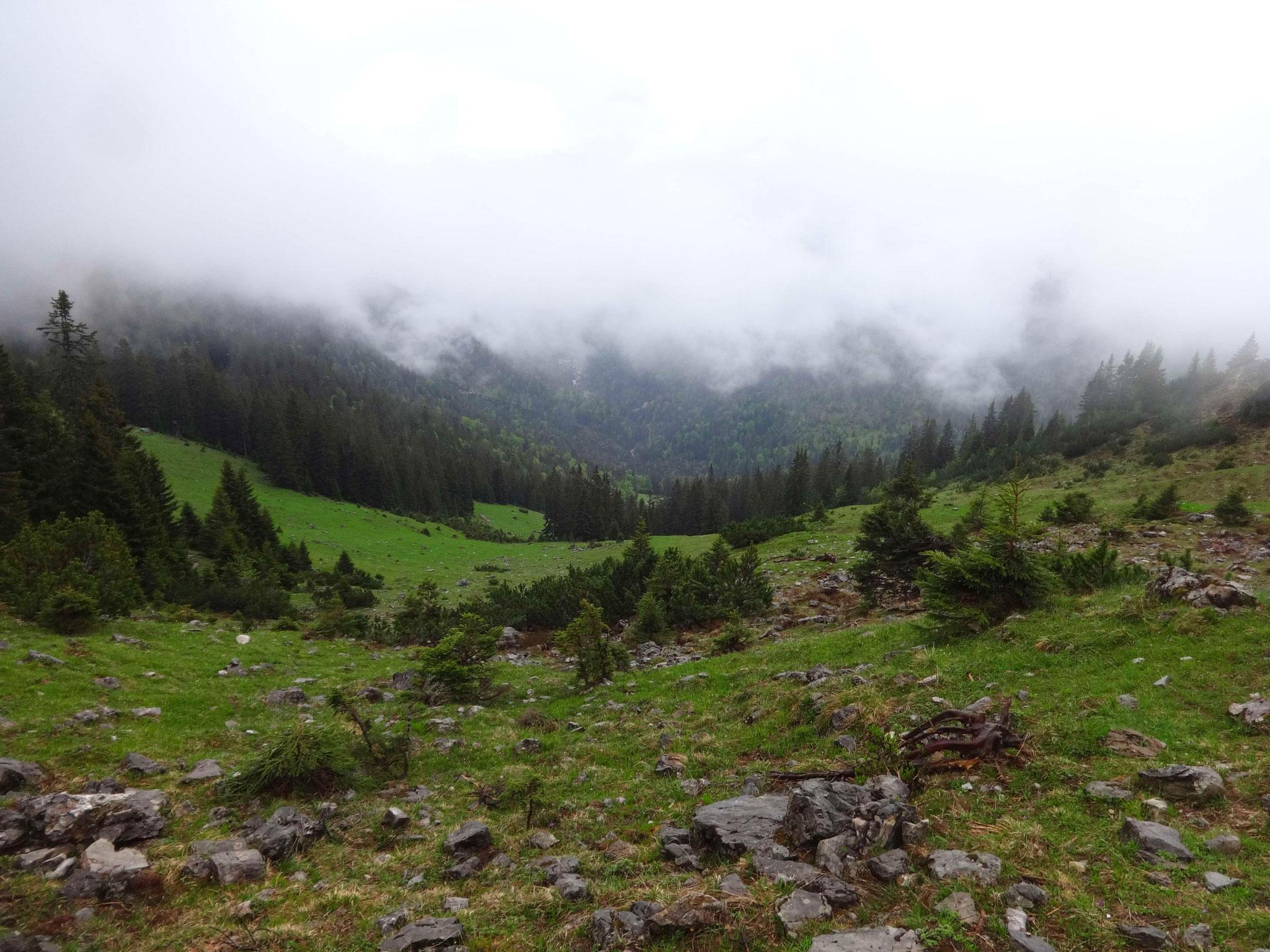 Nach einer kurzen Rast begeben wir uns zurück in die Scharte, von der wir direkt auf einem Wanderweg und grüne Wiesen absteigen...