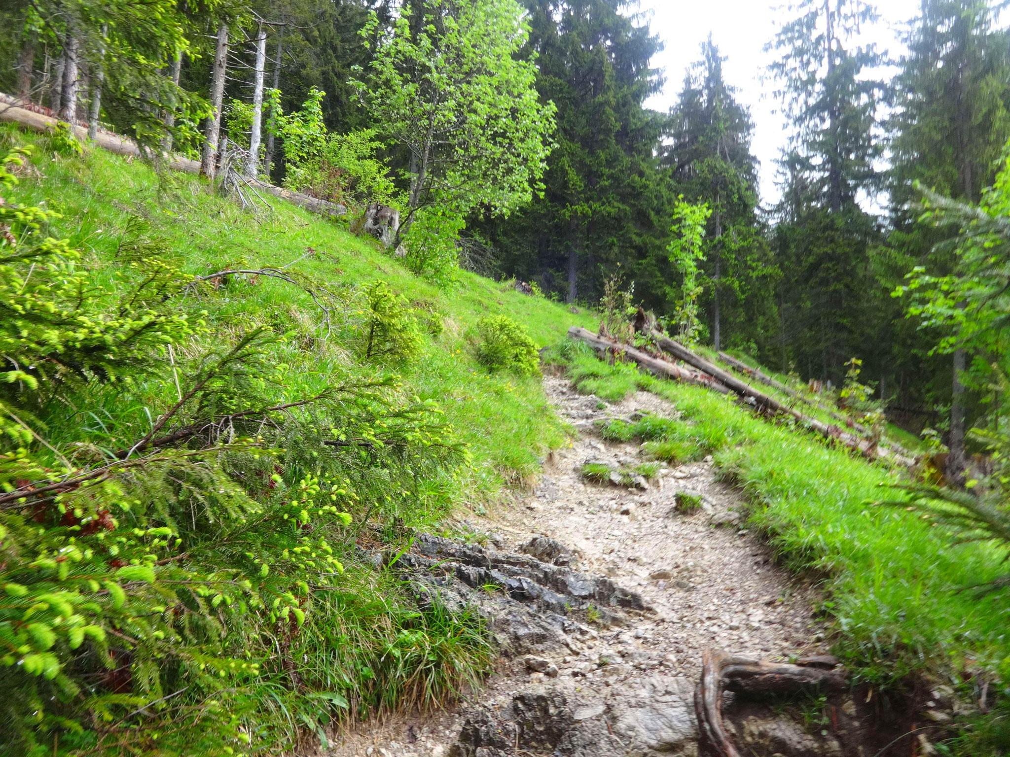Durch den Wald führt der Weg auf ca. 1400 Meter...
