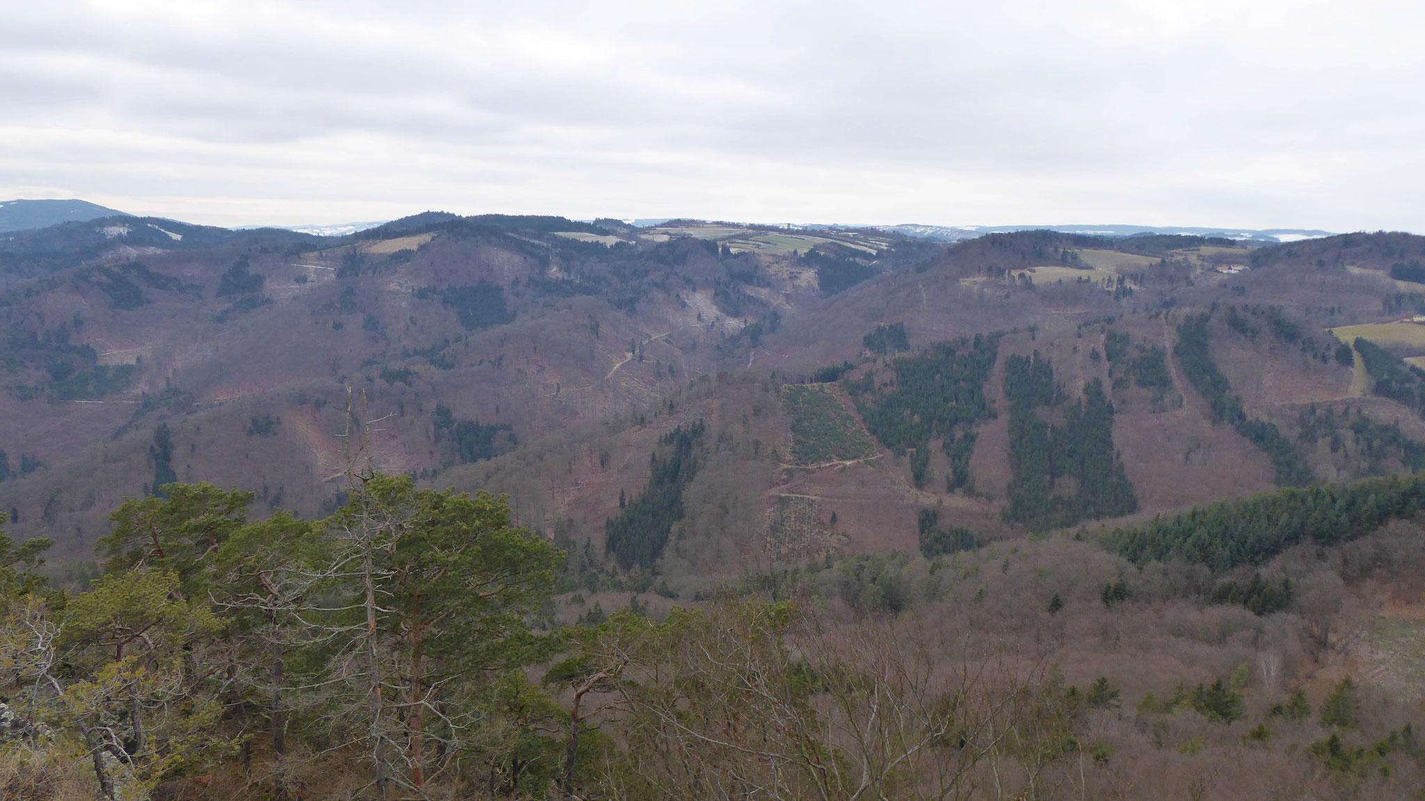 Über den Mosinggraben ins Waldviertler Hochland