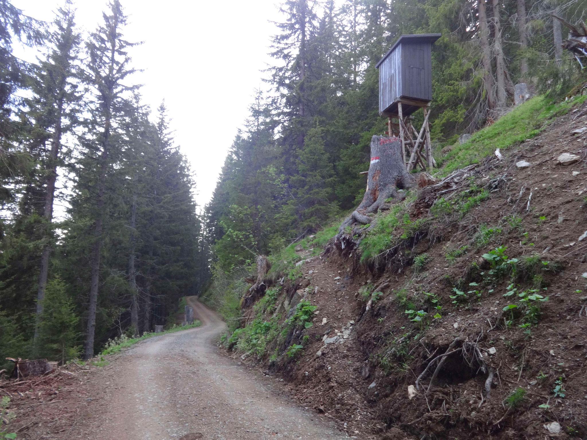 Kurz nach der Forststraße biegt der Wanderweg rechts bei einem Jagastand ab. Bis hierher auch mit Mountainbike möglich...