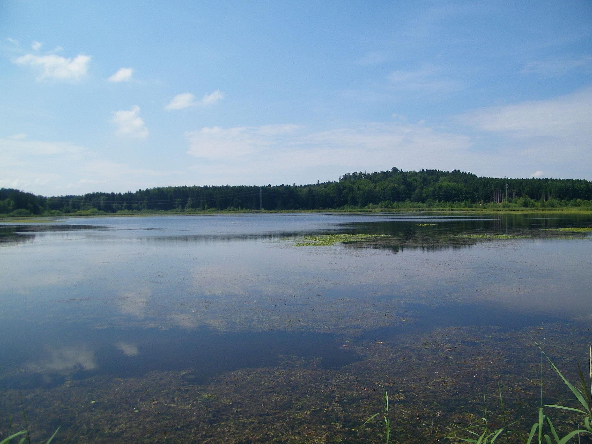 Blick vom Rüdigerdamm auf den See