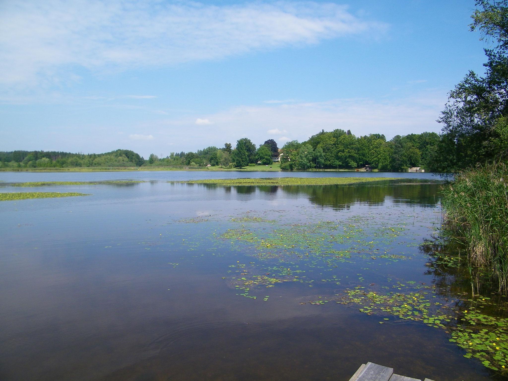 Blick von der Bootsfurt in Richtung Park