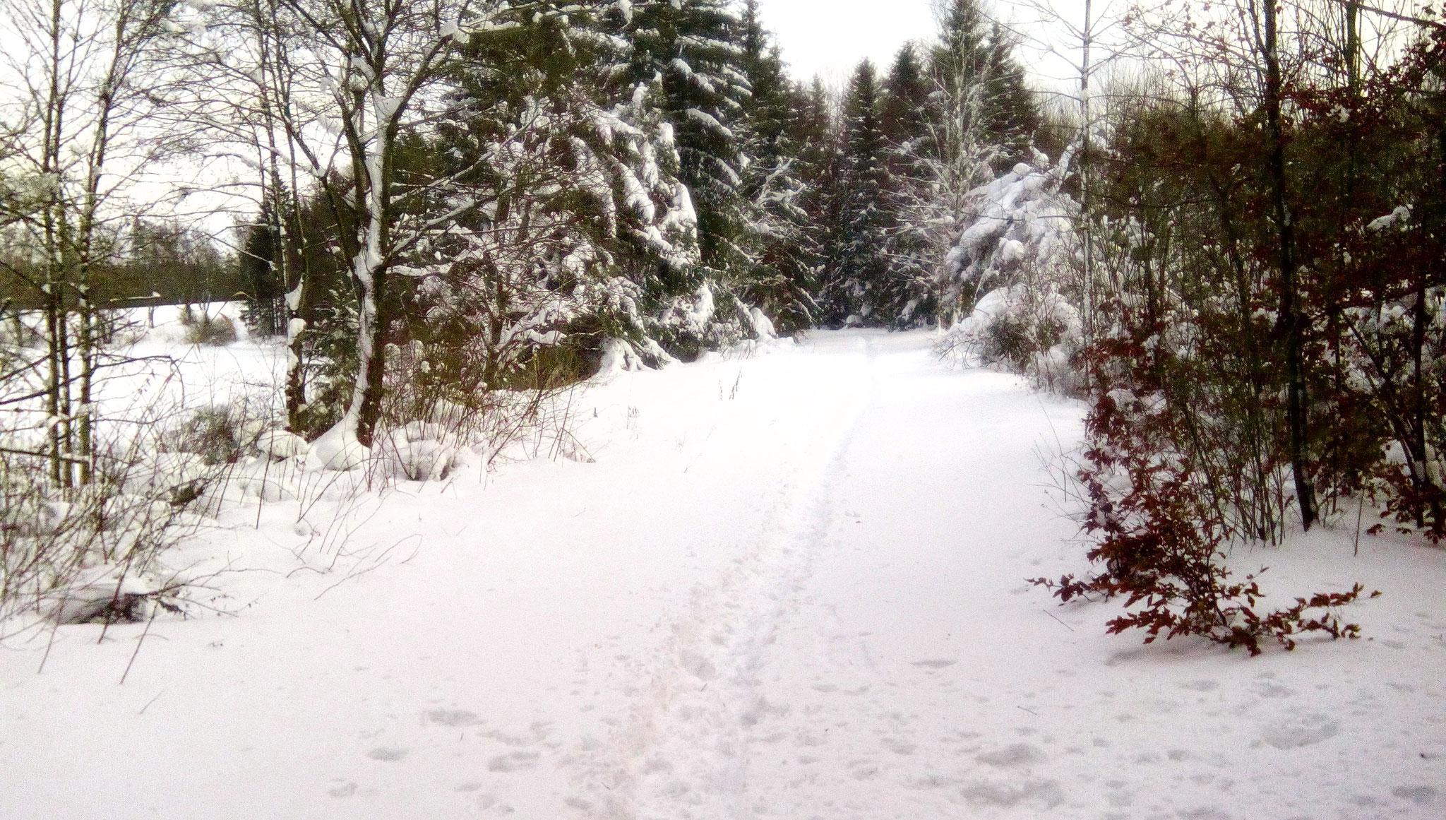 Weg zwischen Klenze und Rüdiger Weiher