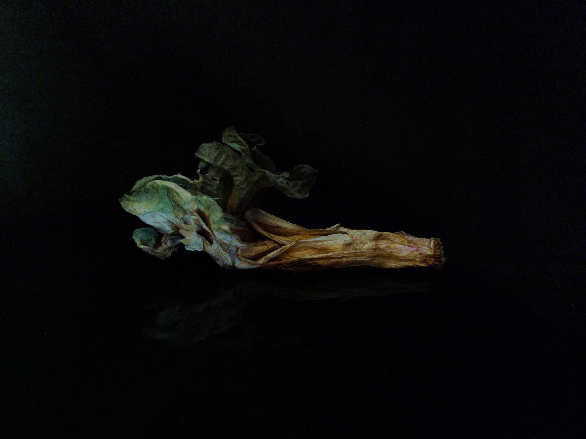 "Joachim Rissmann, ""Dunkle Früchte"", 2021, Fotografie, 18 x 24 cm"