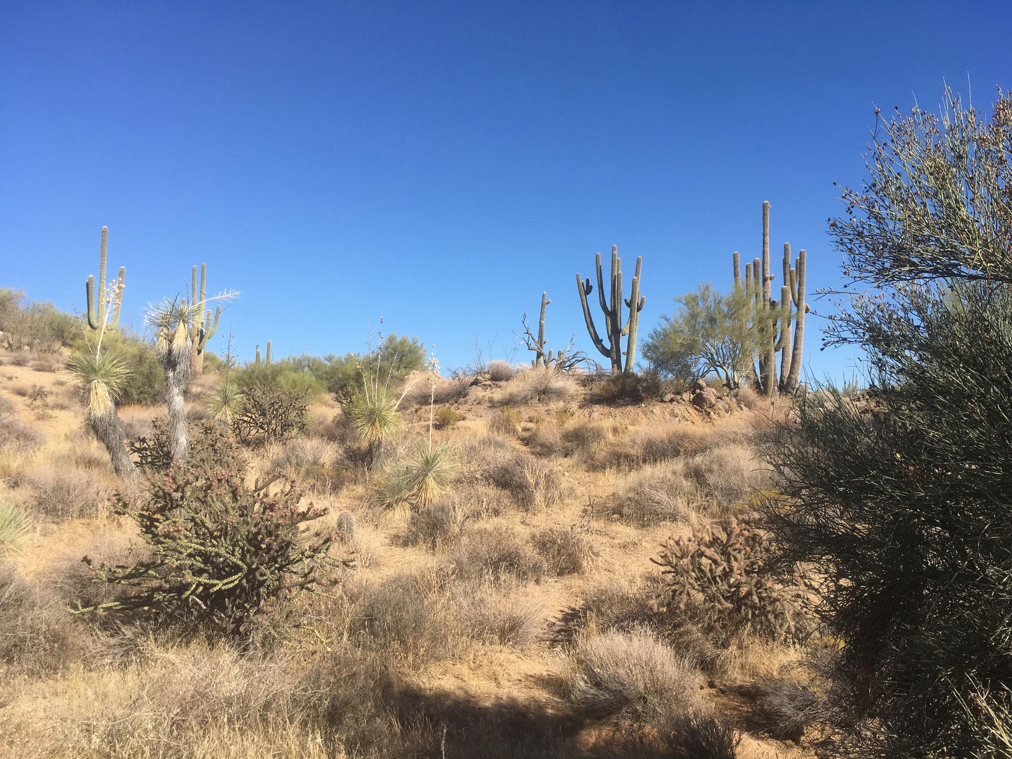 Mc Dowell Sonoran Preserve