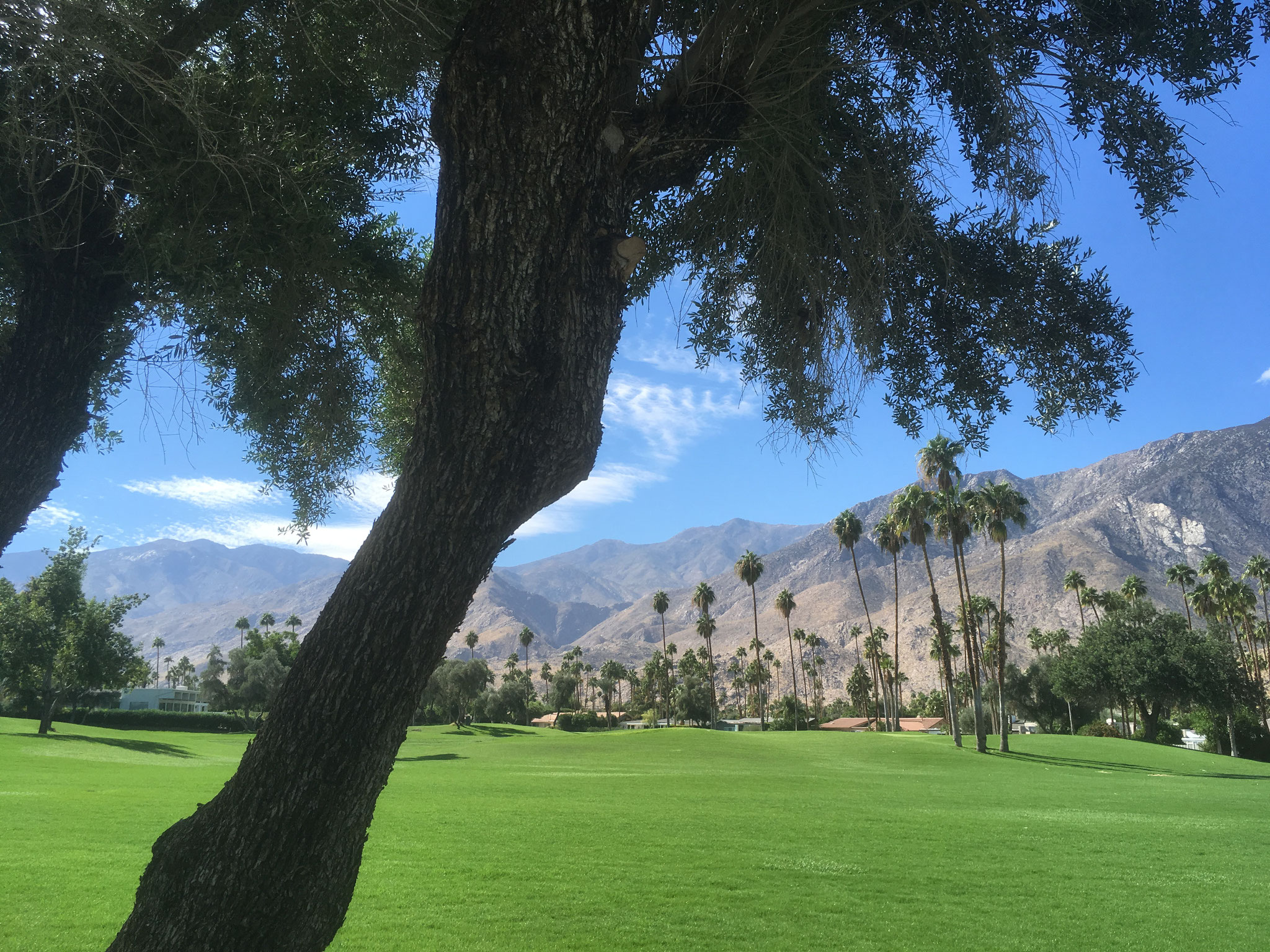 Golf de Palm Springs