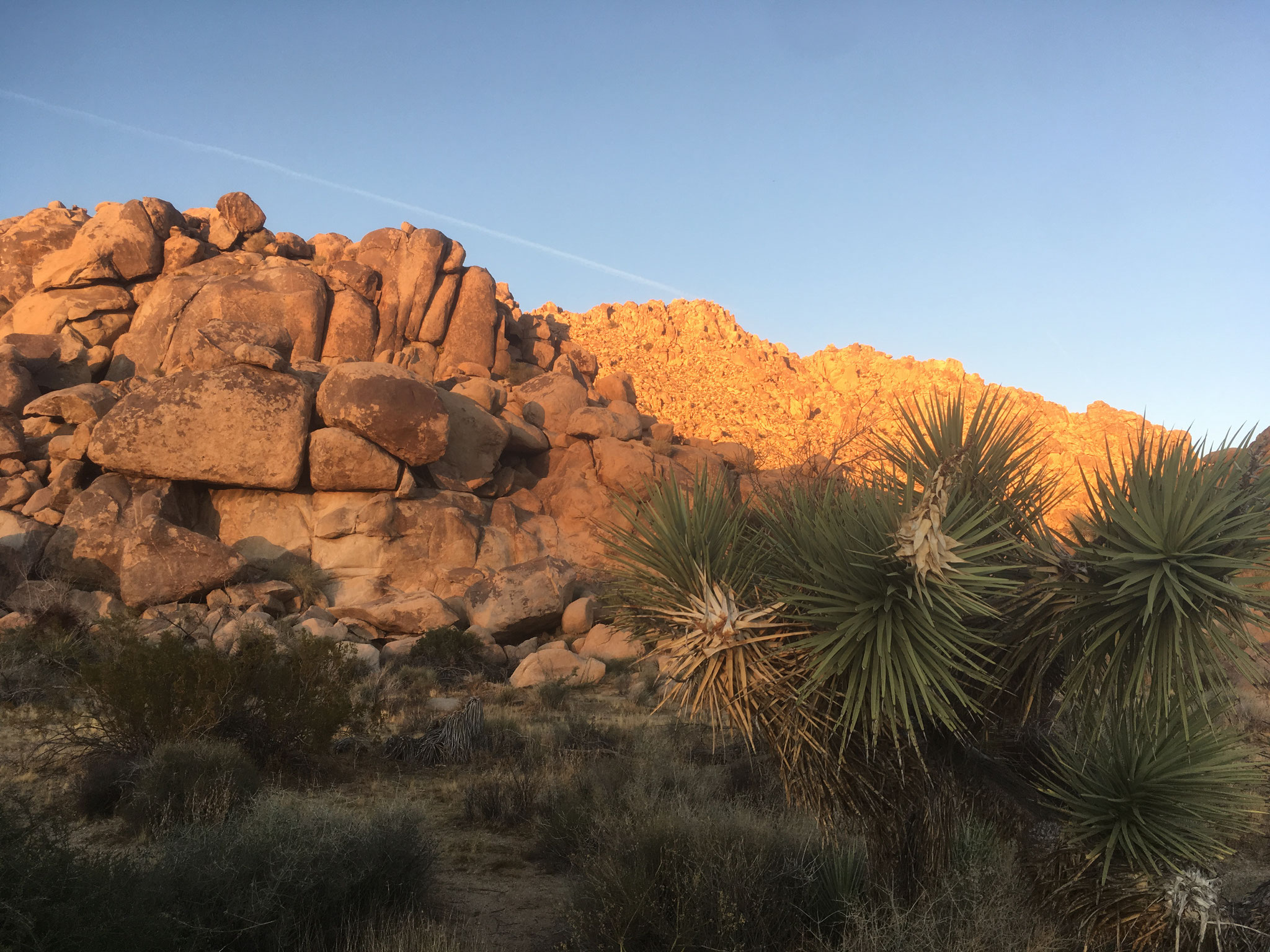 Joshua Tree National Park (Inselberg)