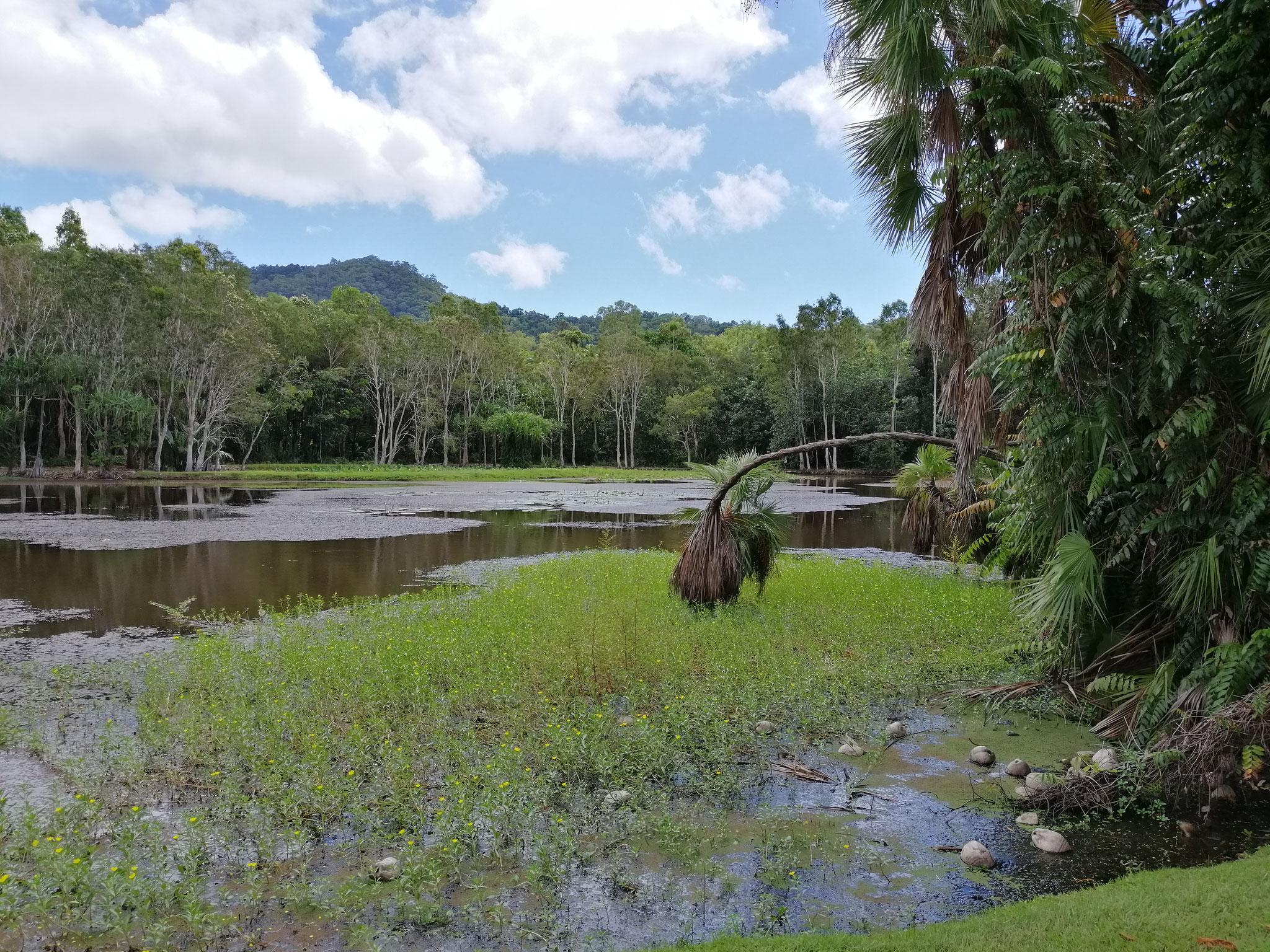 Cairns Botanic Garden