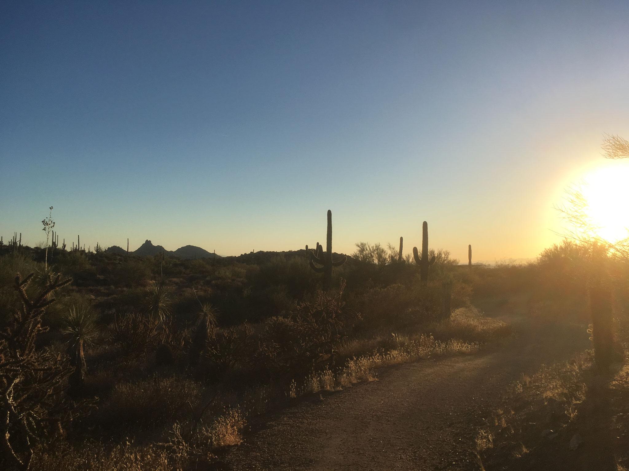 Mc Dowell Sonoran Preserve (Arizona)