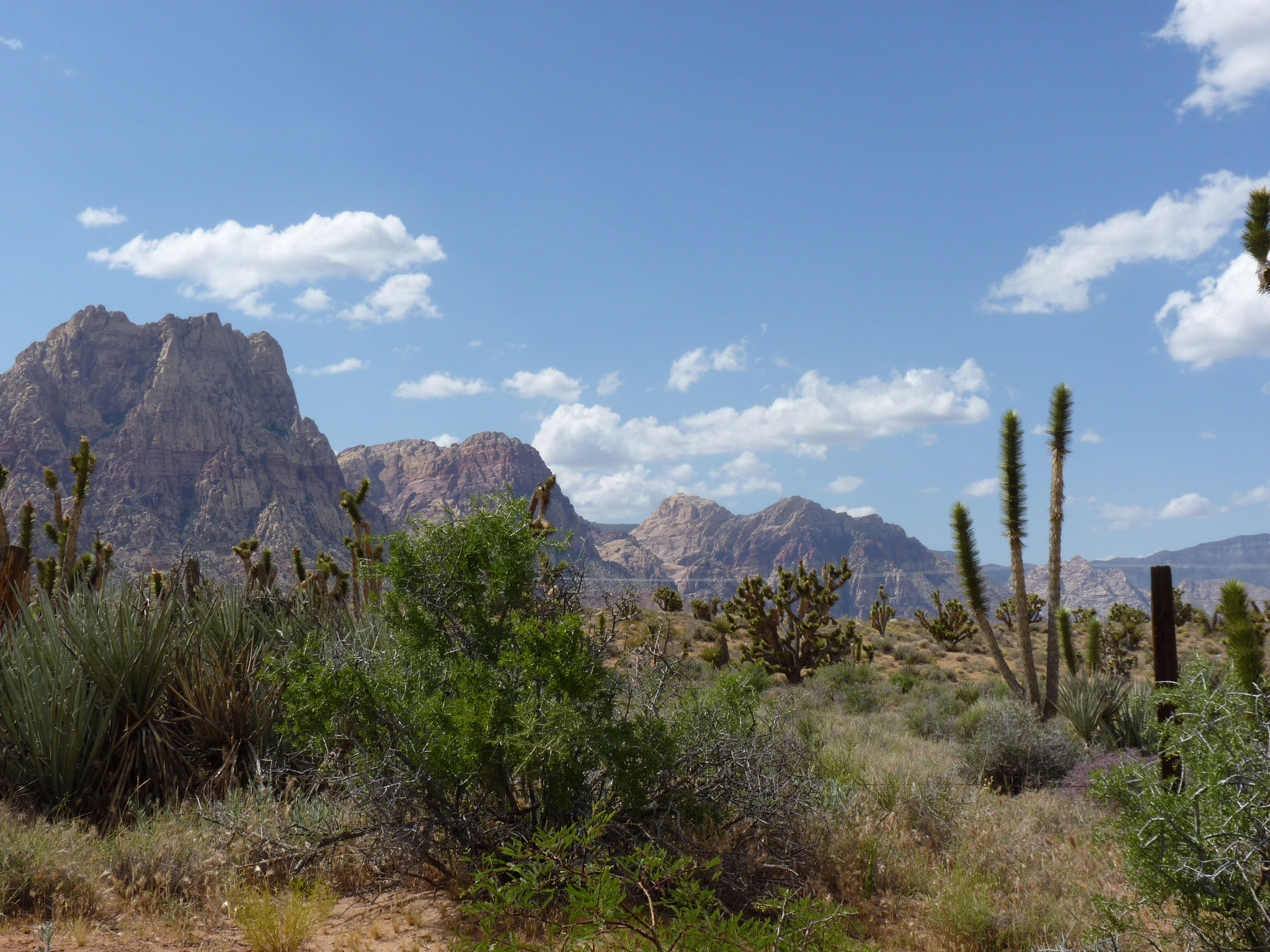 Vue sur le Red Rock Canyon