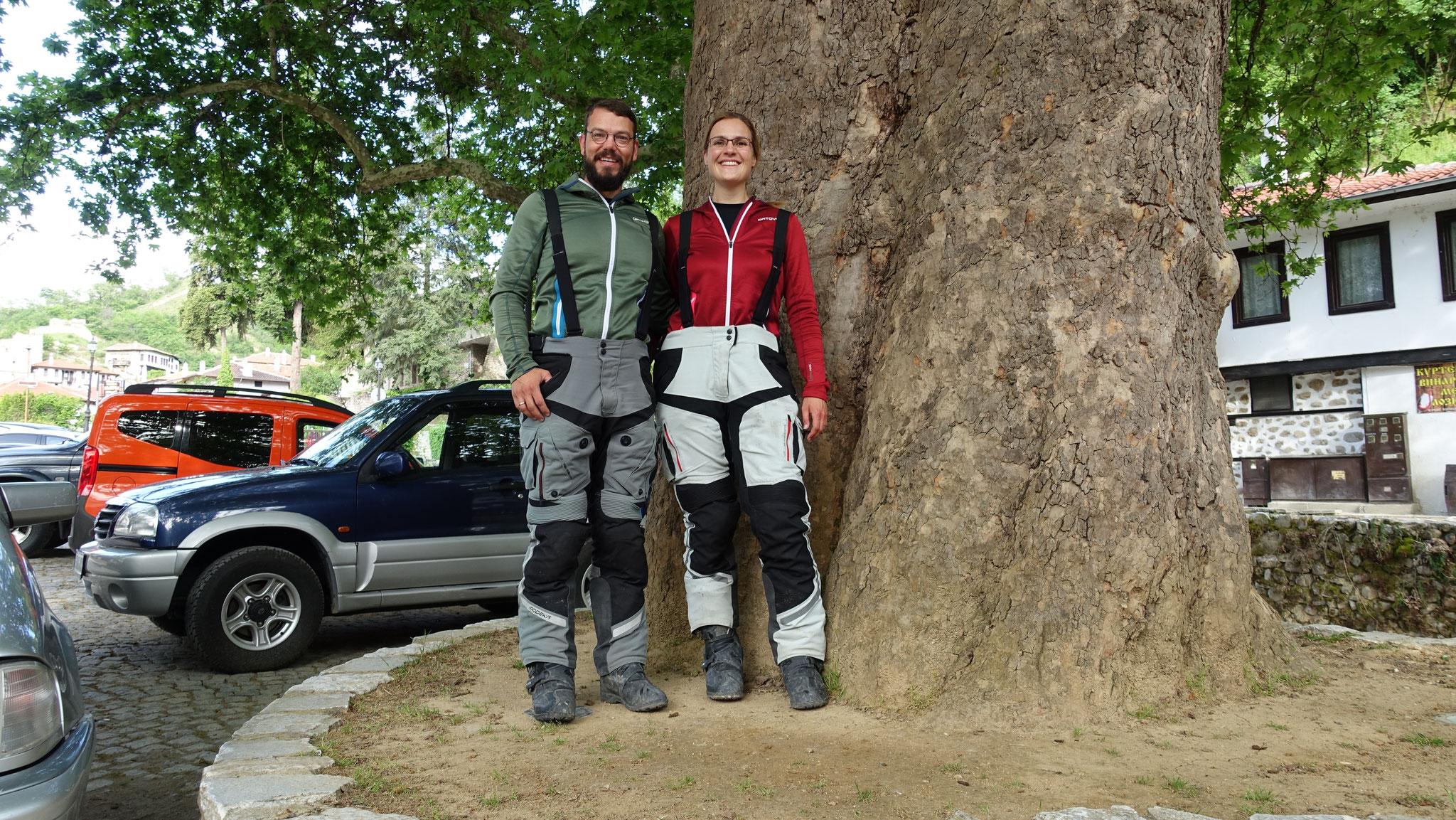 In Melnik müssen wir noch vor einem steinalten Baum posieren :D