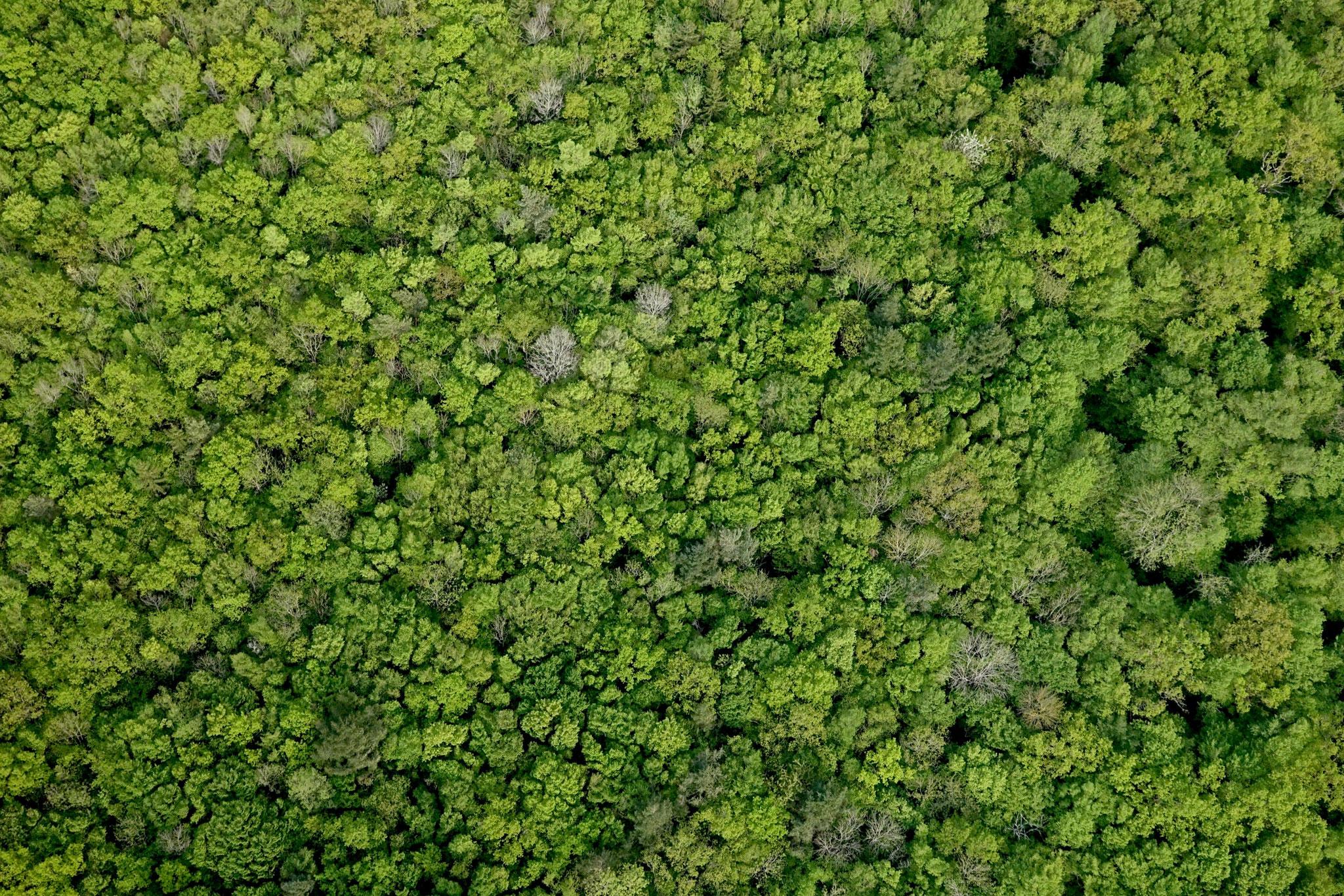 Morvan ou Amazonie ?