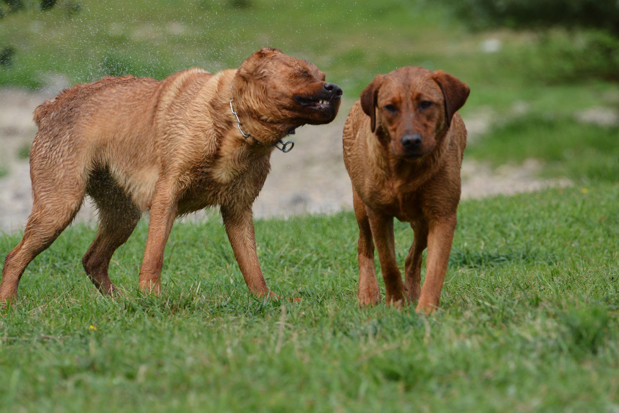 Hutch & Kimba