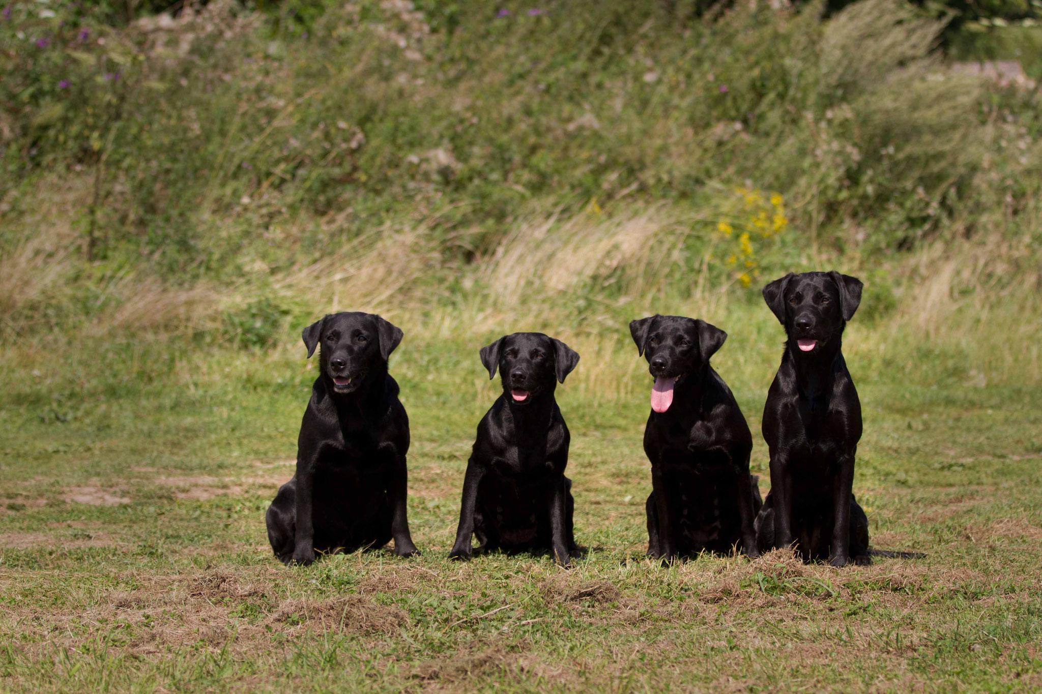 Familienfoto: Fin - Grace - Ivy - Sage