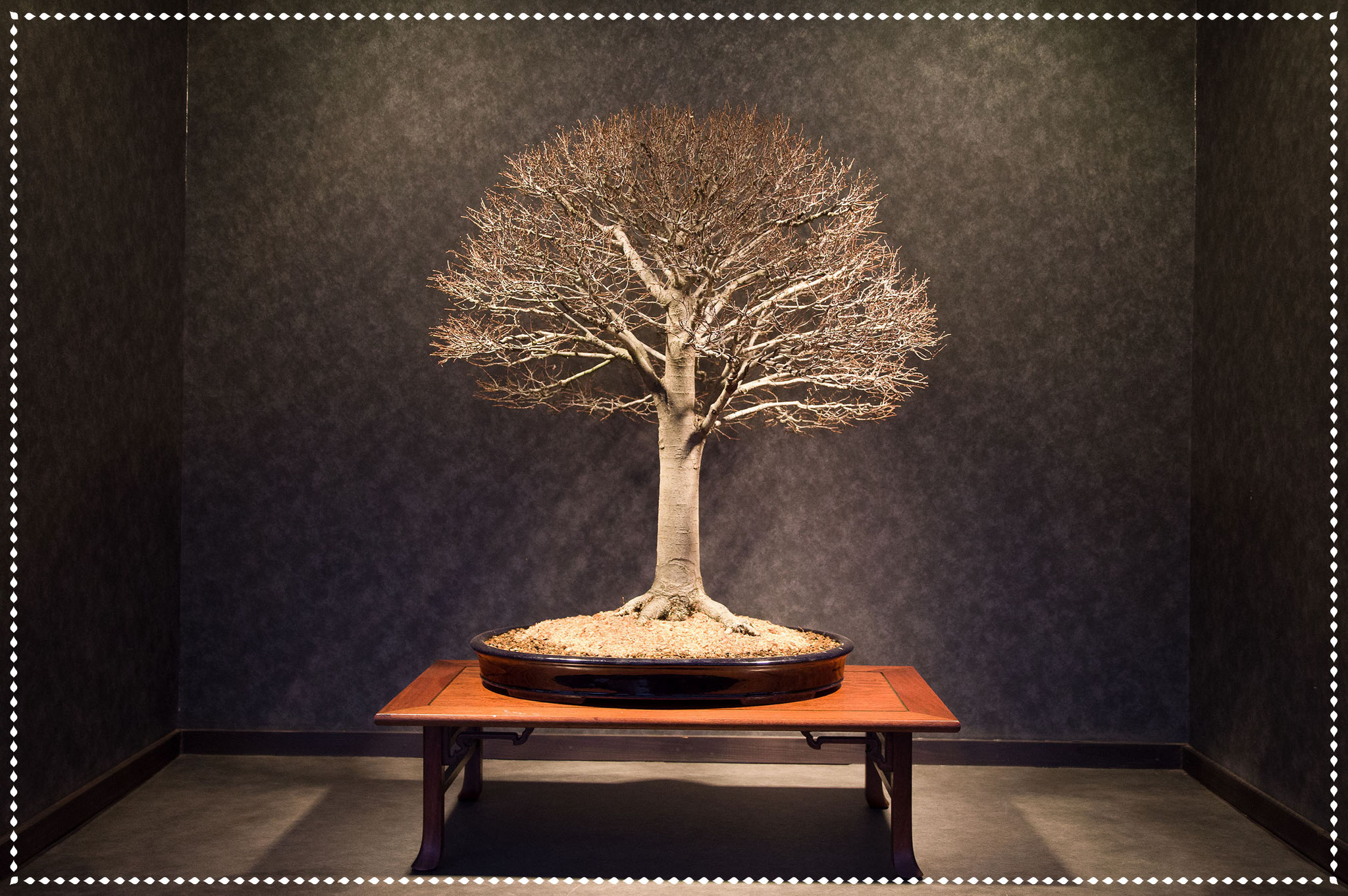 木のすがた at 酒井盆栽