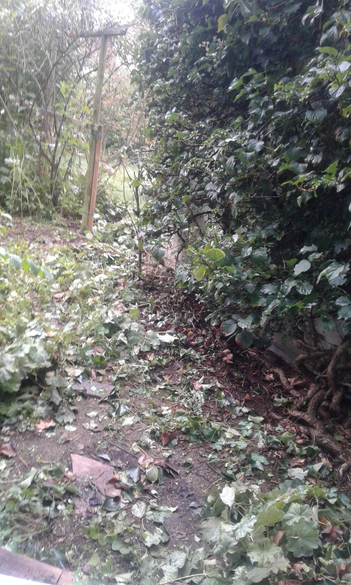 Beet- und Rasen-Neuanlage Wangen - VORHER