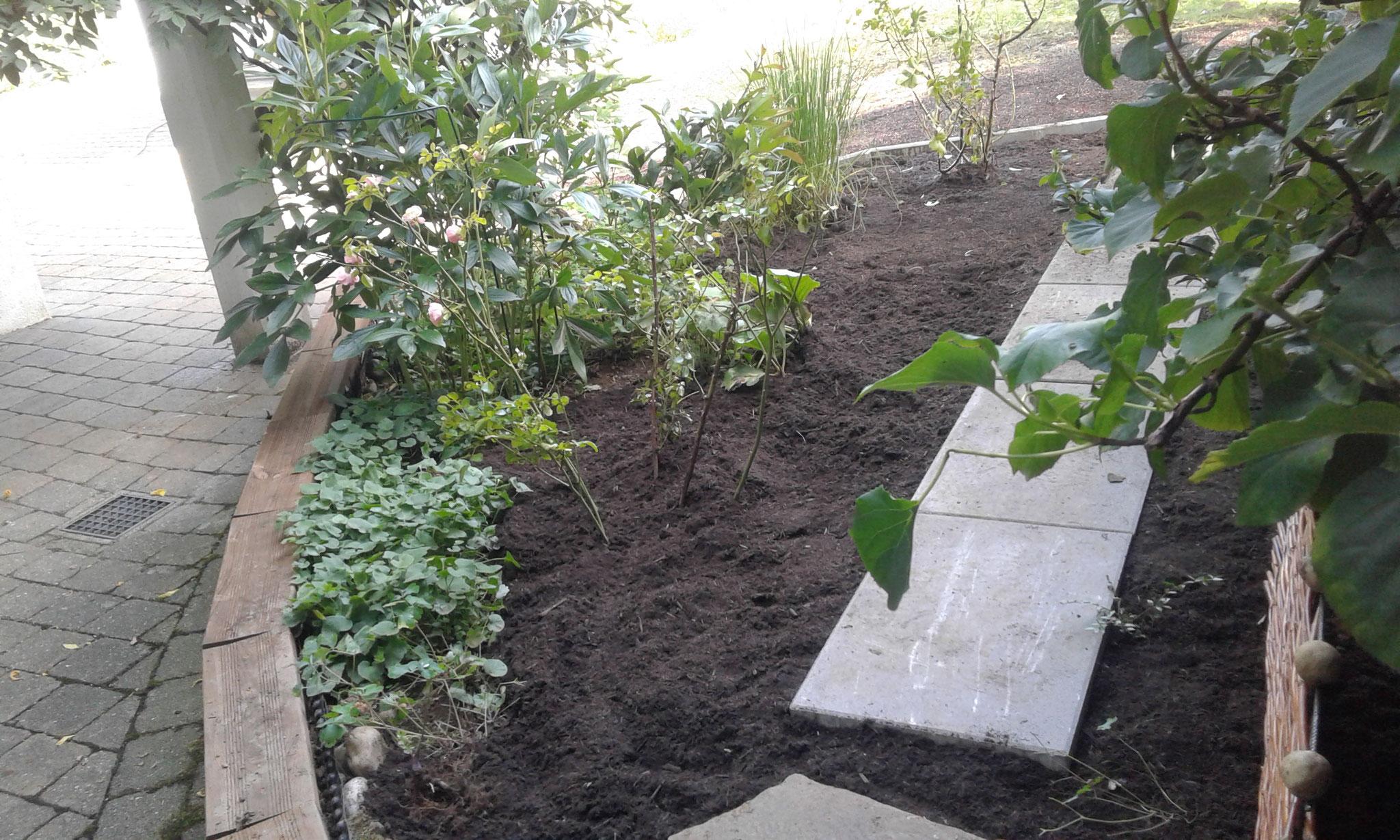 Beet- und Rasen-Neuanlage 2017 Wangen - NACHHER