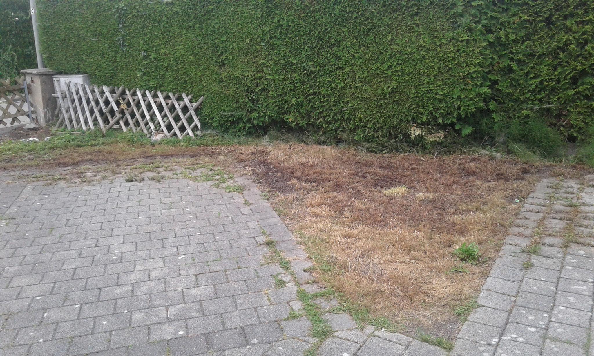 Pflanzung Thuja-Hecke und Anlage Blumenwiese in Wangen - VORHER