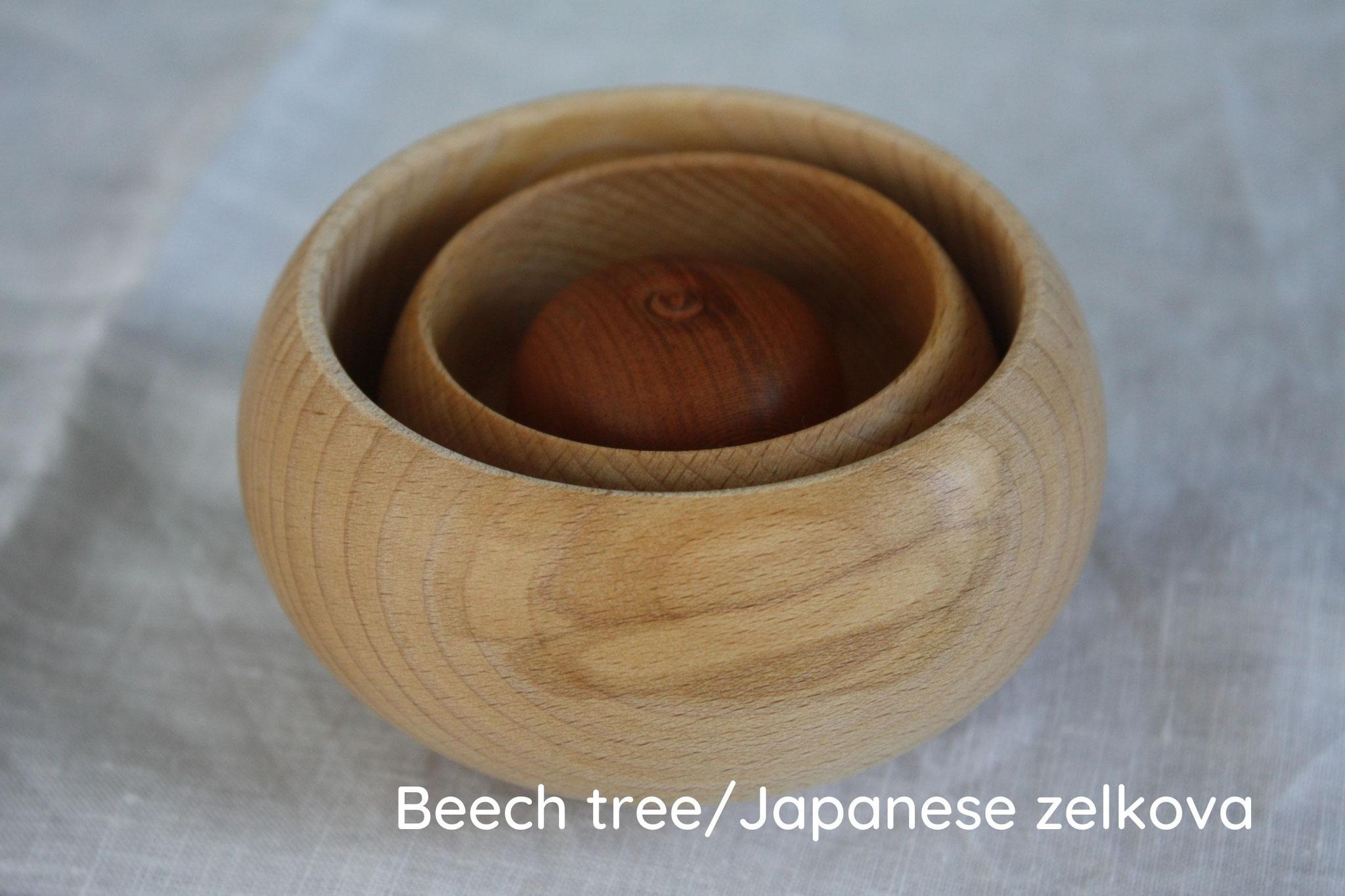 Kagamimochi beech tree