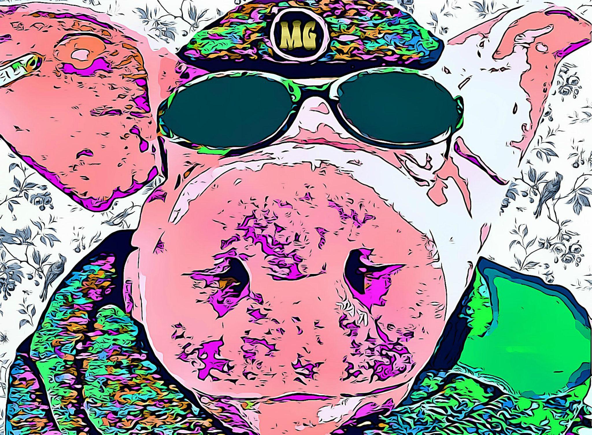 Dutch Pig