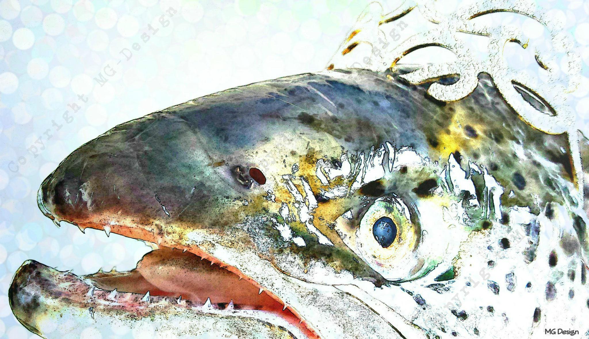 Salmon (Zalm)