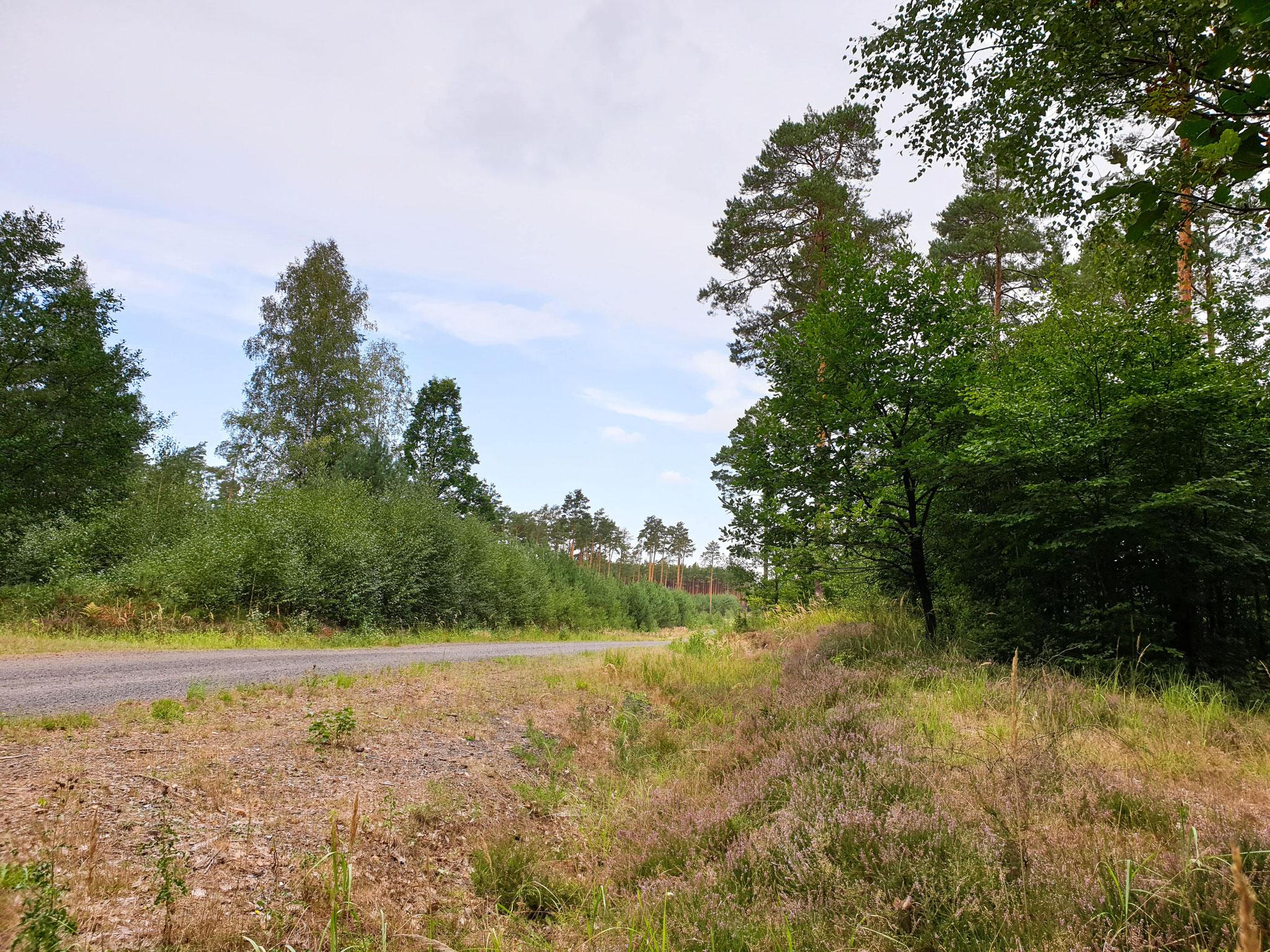 """Muskauer Faltenbogen """"Szlak Kolejowo-Górniczy"""""""