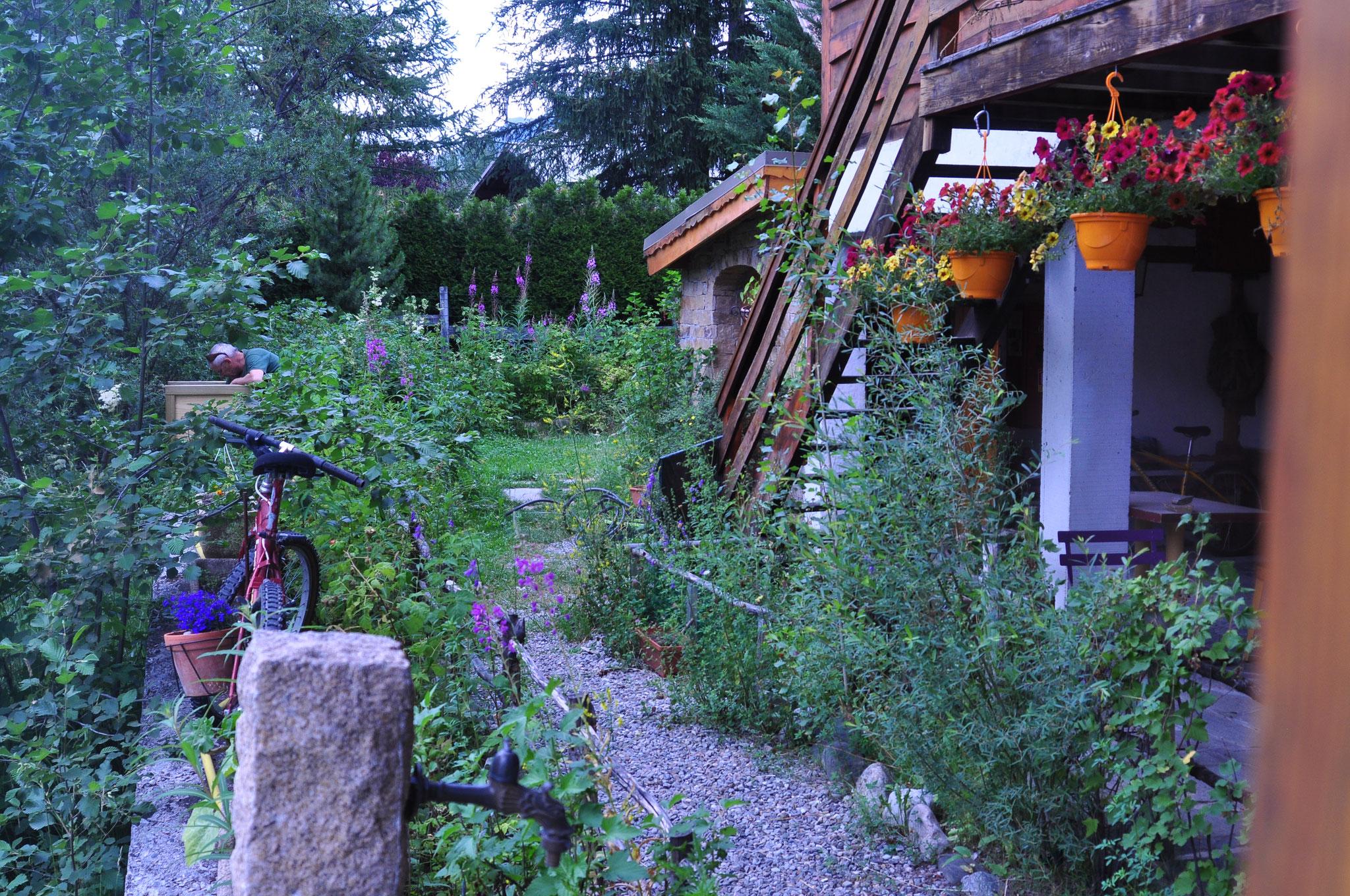 au chalet côté jardin devant la Guisane, notre rivière ;épilobes au milieu des framboisiers