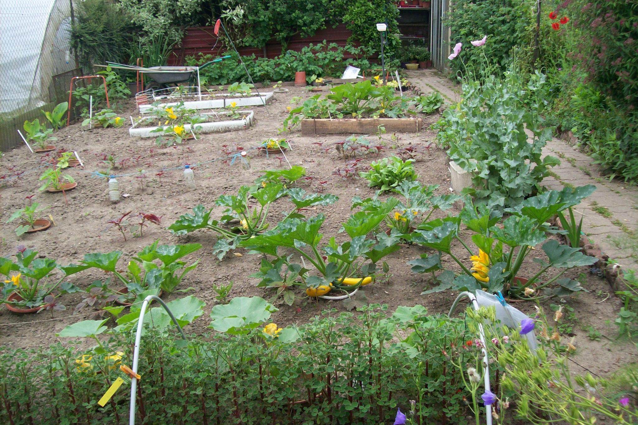 le coin de la permaculture