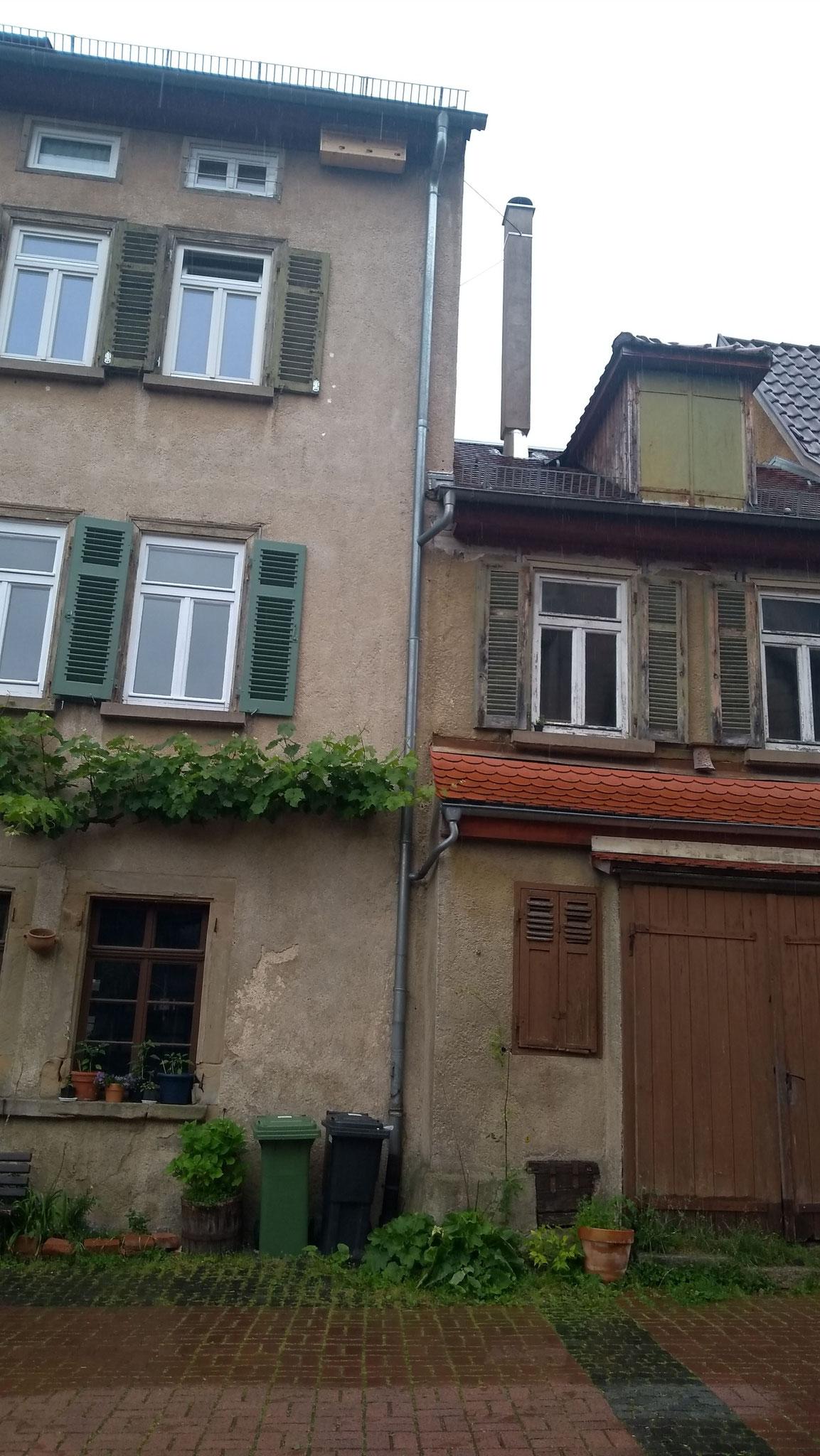 Nistkasten unterm Dach, Madergasse / NABU Tübingen