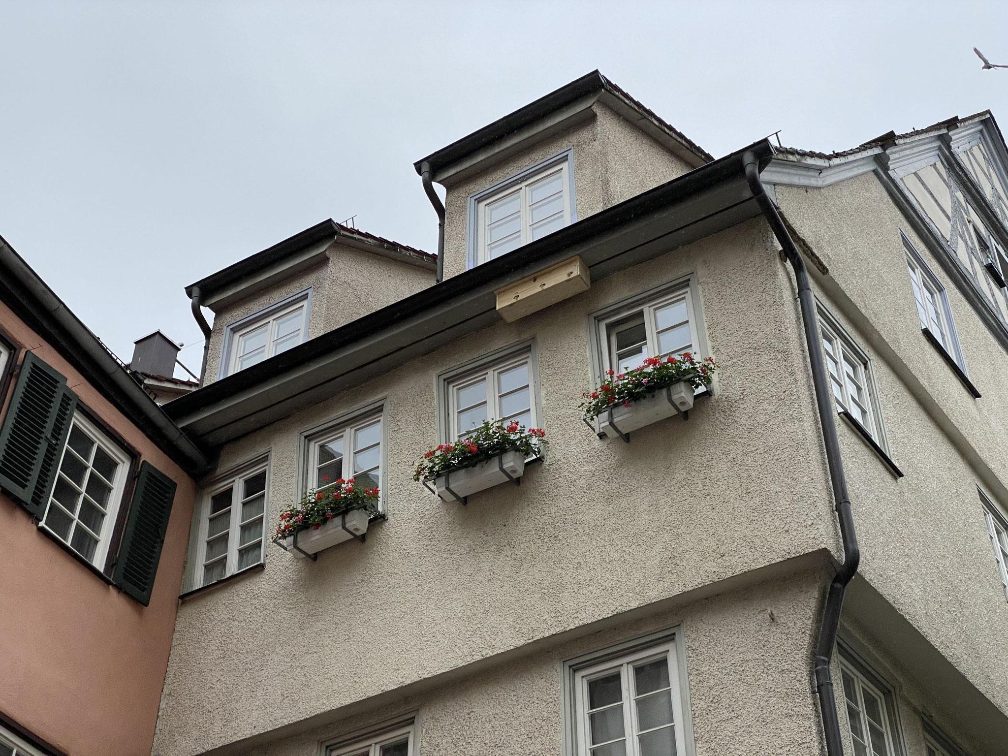 Koloniekasten in der Altstadt / NABU Tübingen