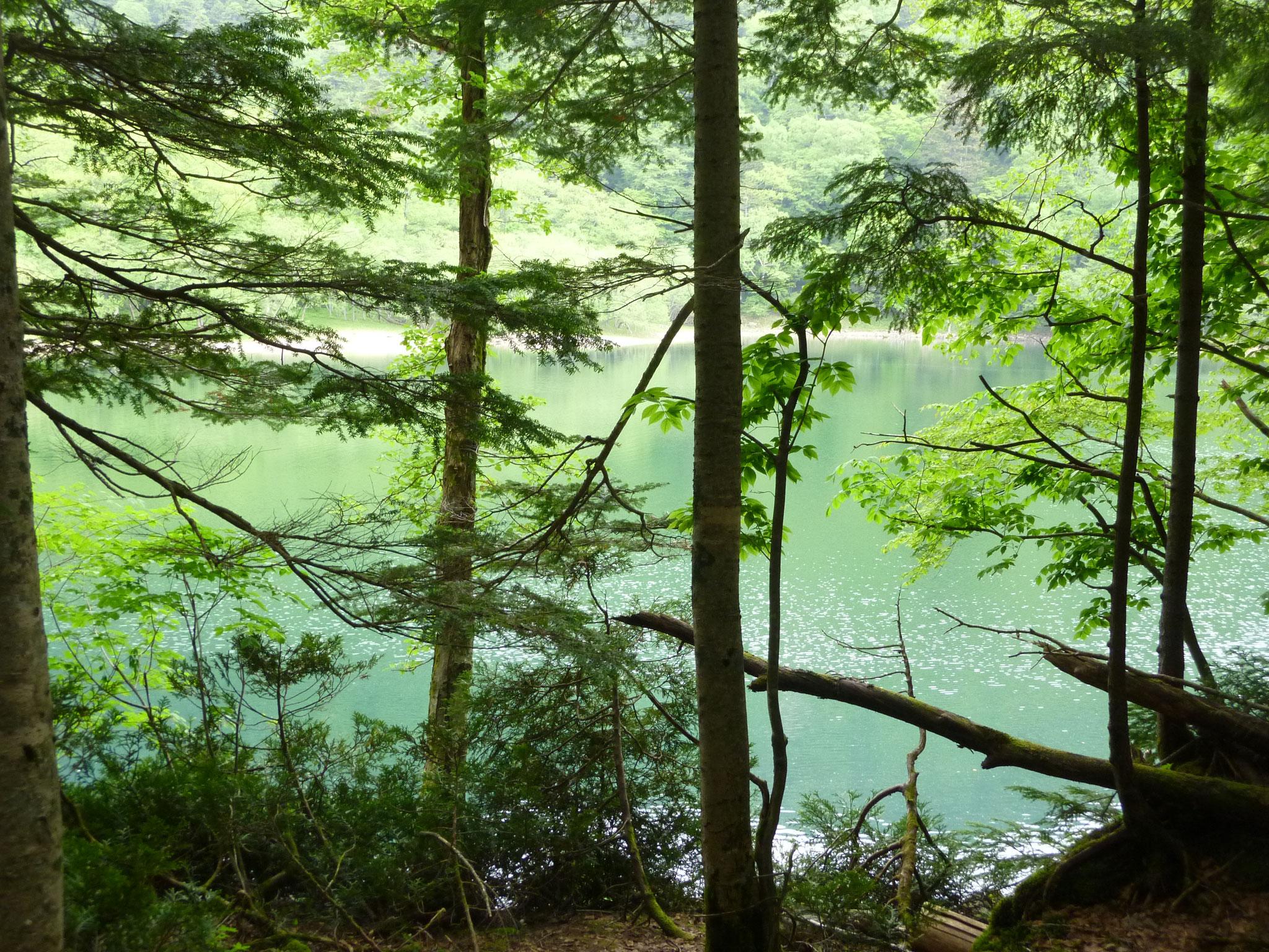 6月 奥日光  エメラルドグリーンの切込湖・刈込湖 (日光国立公園)