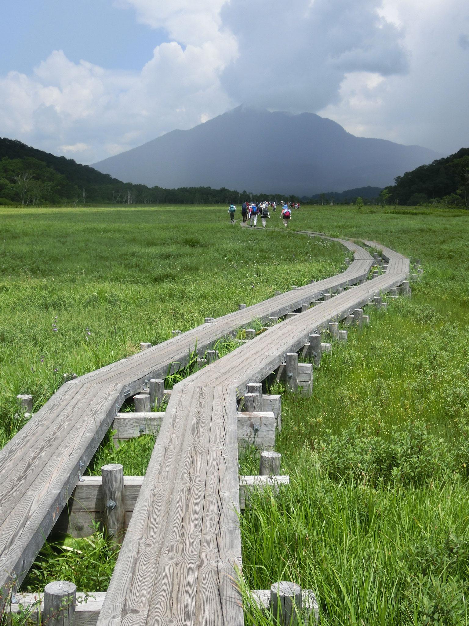 6月 尾瀬ヶ原の木道 (尾瀬国立高原)