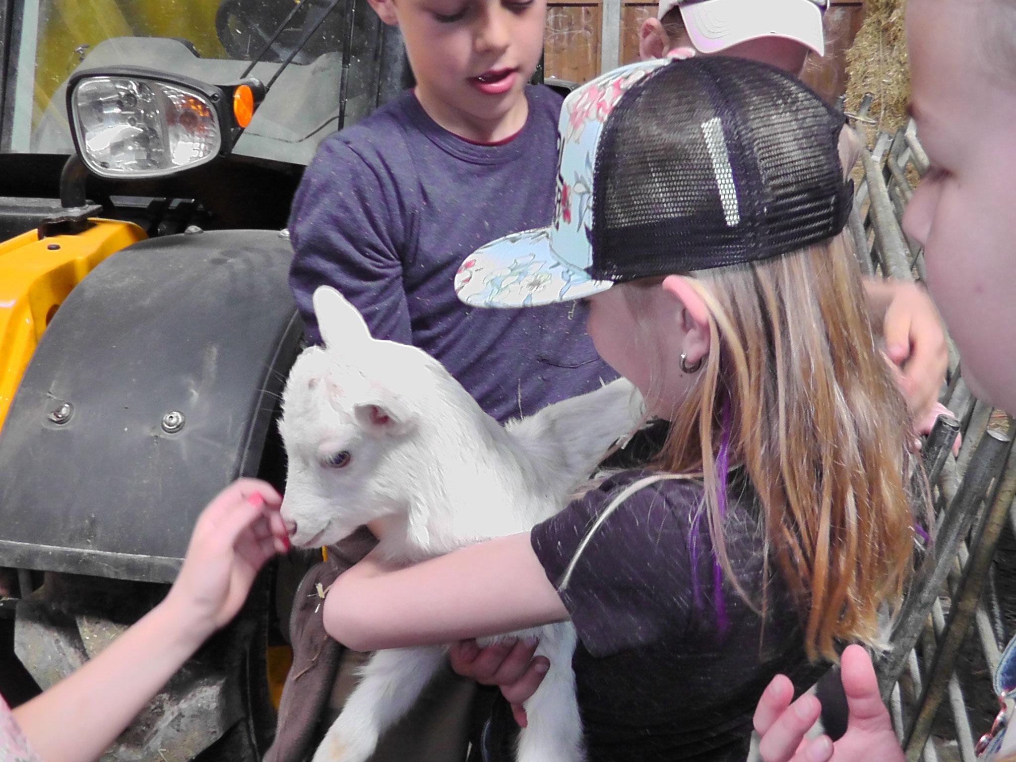 Besuch im Schaf- und Ziegenstall