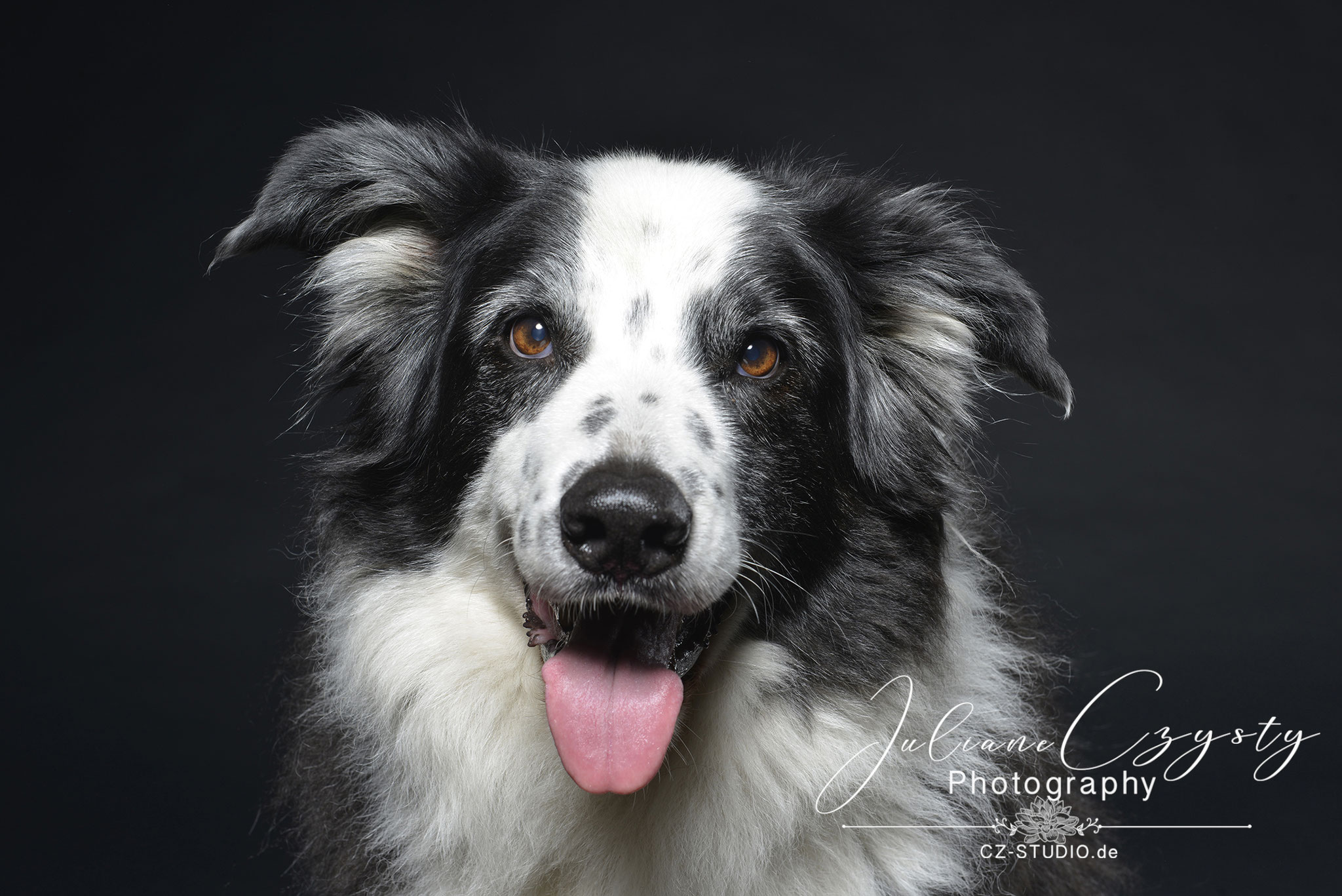 Hundefotografie im Fotostudio zwischen Visselhövede und Rotenburg