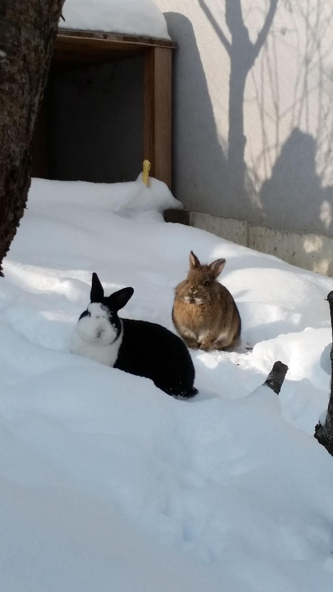 Schneehaserln