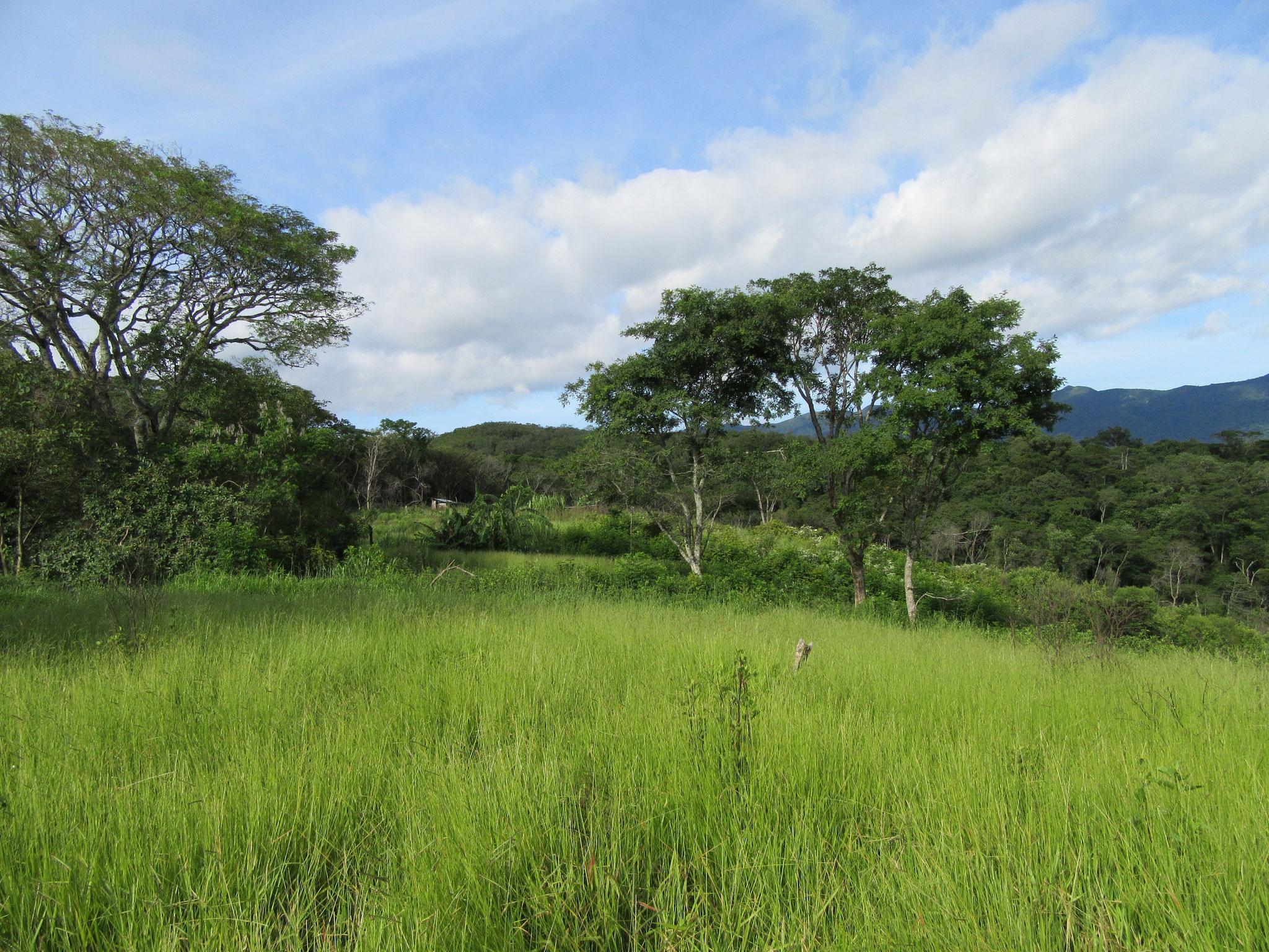 An verschiedenen Stellen wird es Fruchtbaumplantagen für alle Anwohner geben