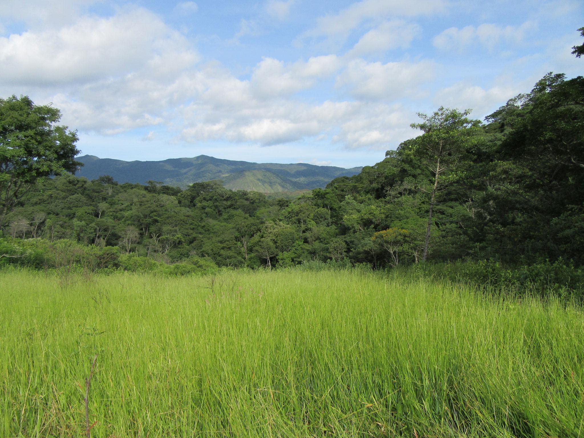 Der Boden ist sehr fruchtbar und das Grundwasser nur wenige Meter unter der Erde