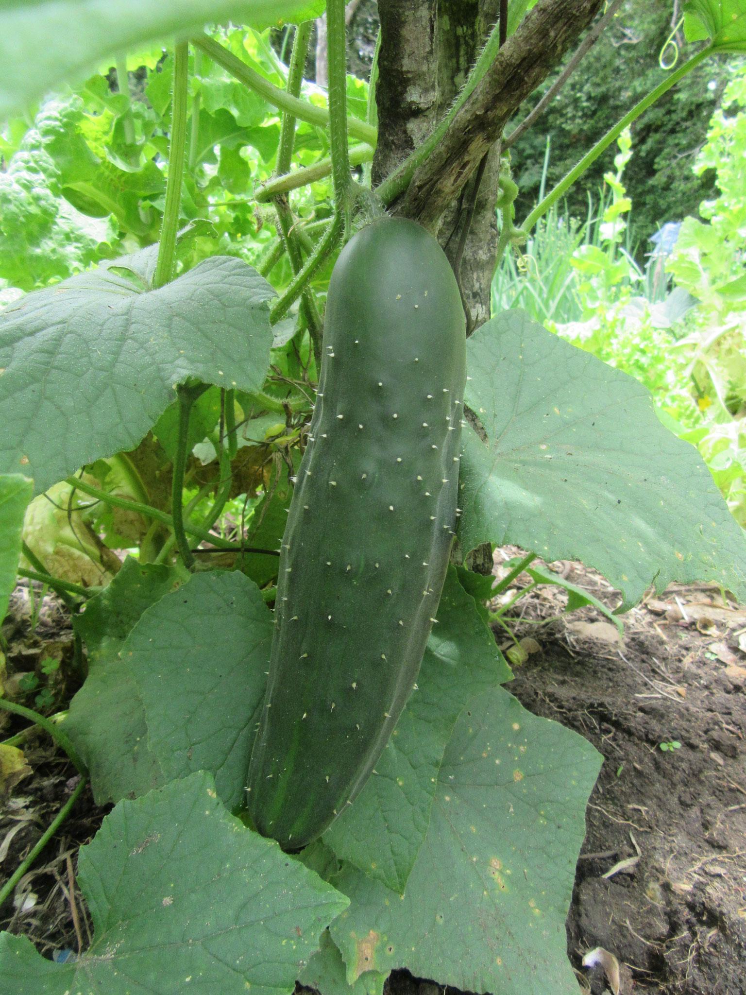 Der Boden ist sehr fruchtbar und voller Nährstoffe