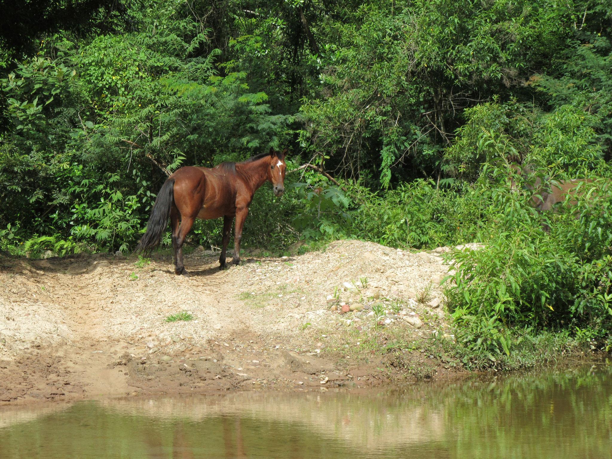 Auch Pferde leben frei und glücklich im Zufluchtsort