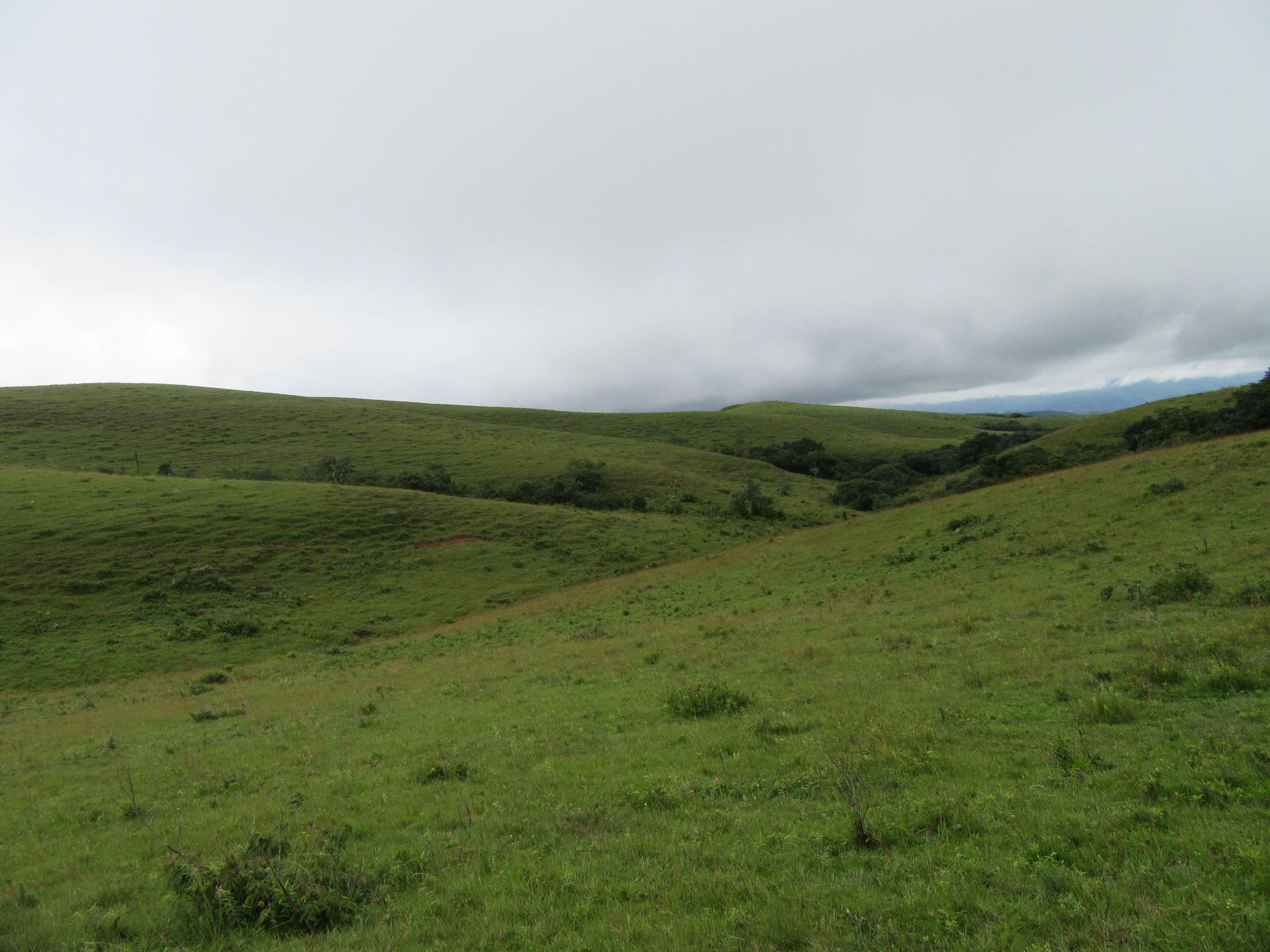 Wir besitzen große Weideflächen und ideale Landstriche für die Landwirtschaft