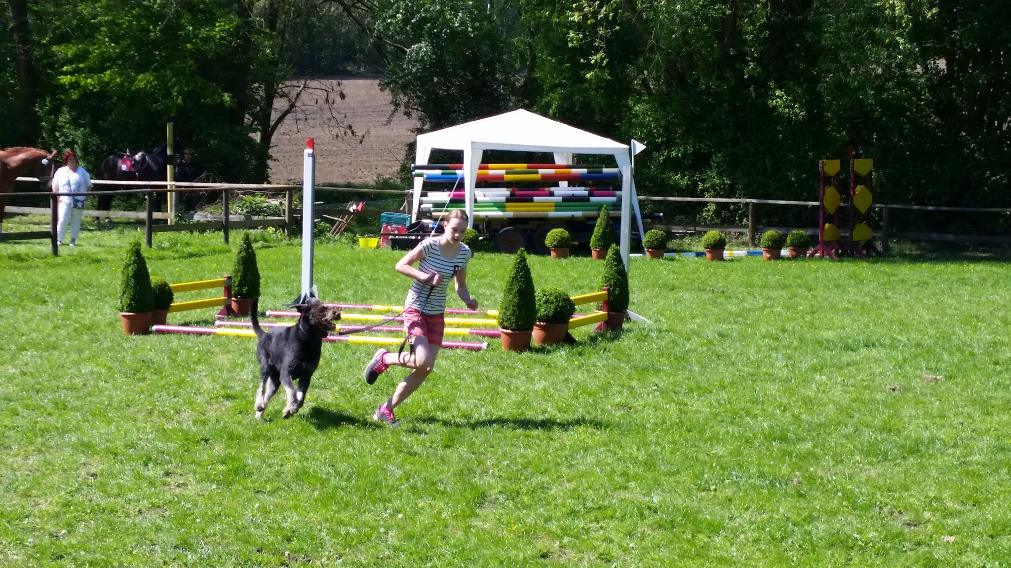 Hund und Pferd - ein Wettbewerb mit Spaß und Ehrgeiz