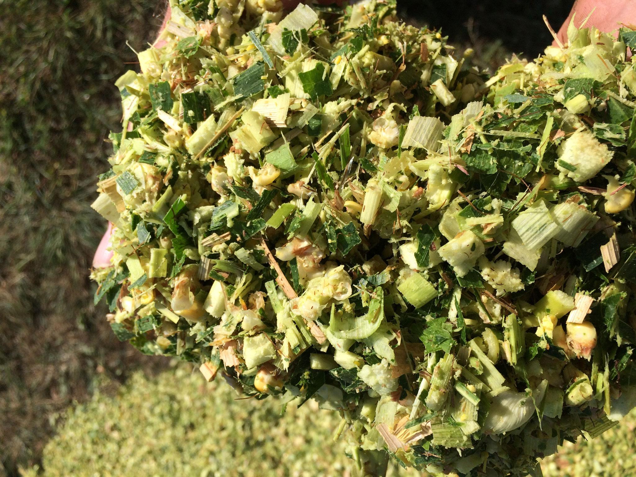 Qualitäts-Maissilage mit Hochleistungs-Kornaufbereitung bei 4-30mm Schnittlänge