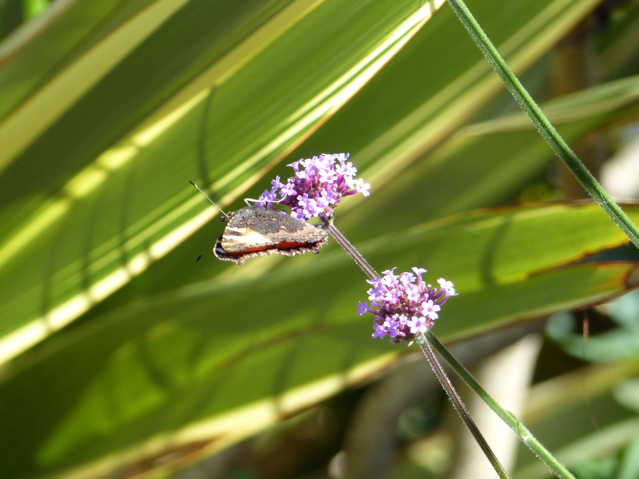 La biodiversité à Louvroil