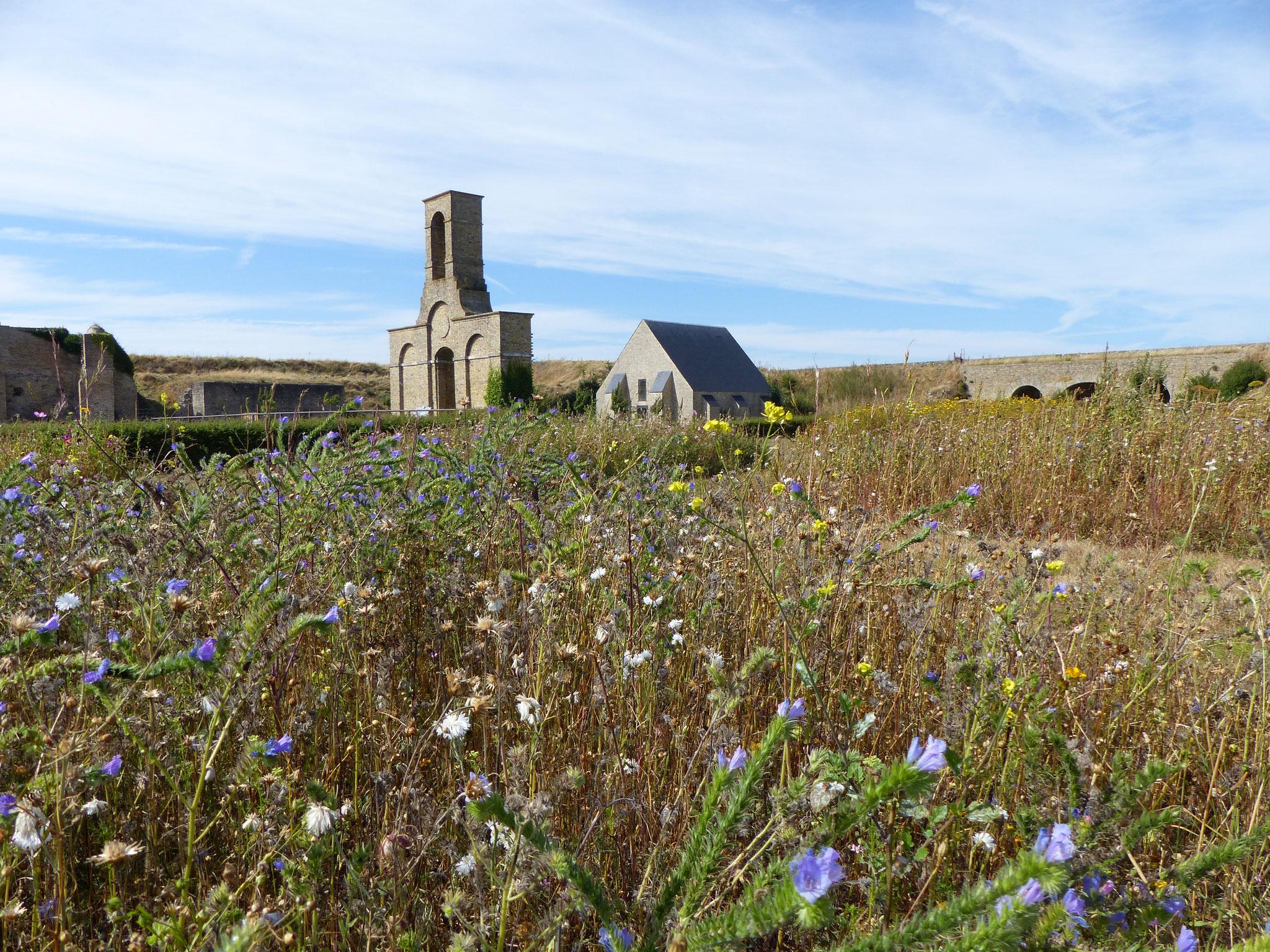 prairie fleurie au Vieux-Fort