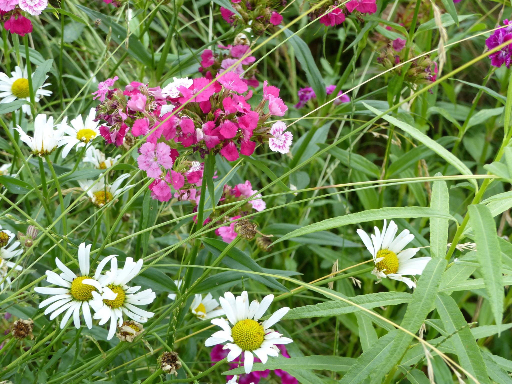 De jolies fleurs se développent dans le Jardin